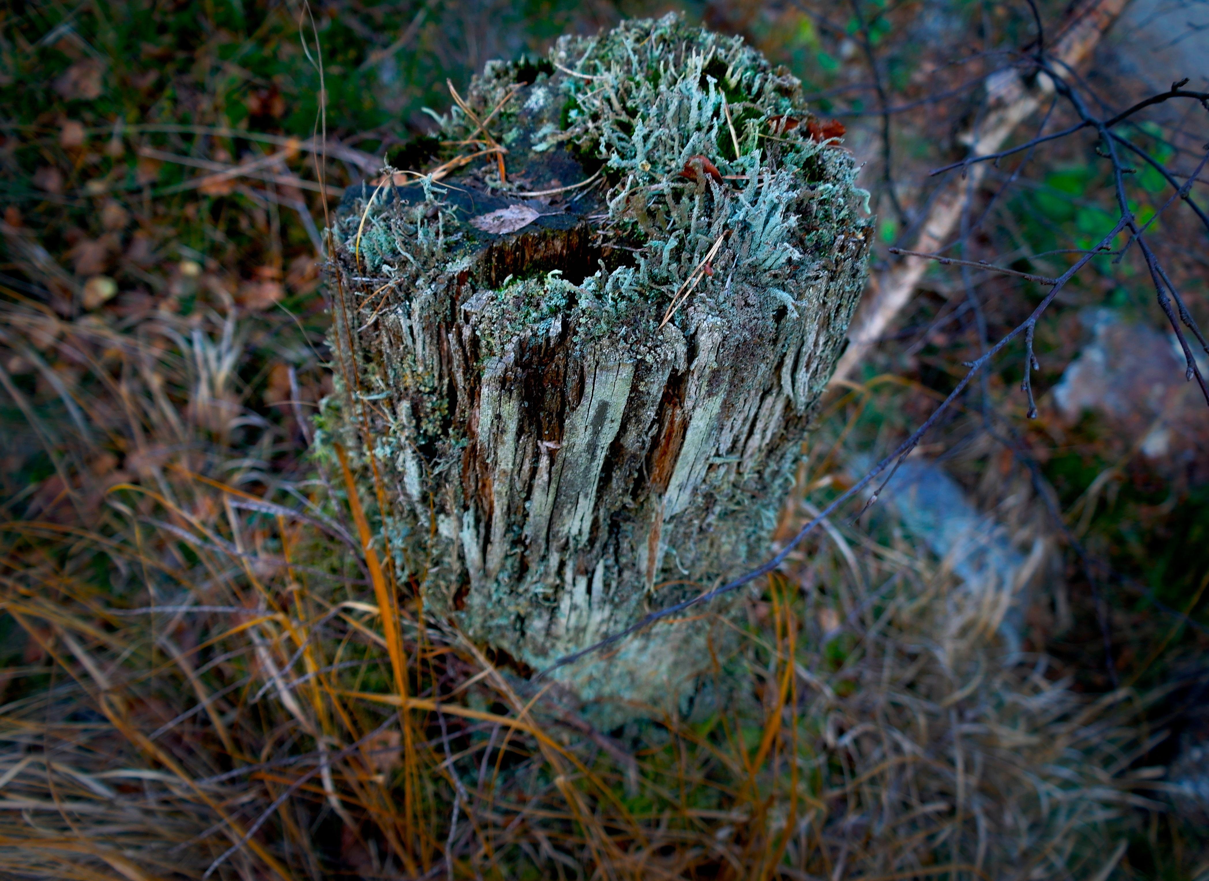 images gratuites paysage arbre la nature for t herbe branche plante feuille tronc. Black Bedroom Furniture Sets. Home Design Ideas