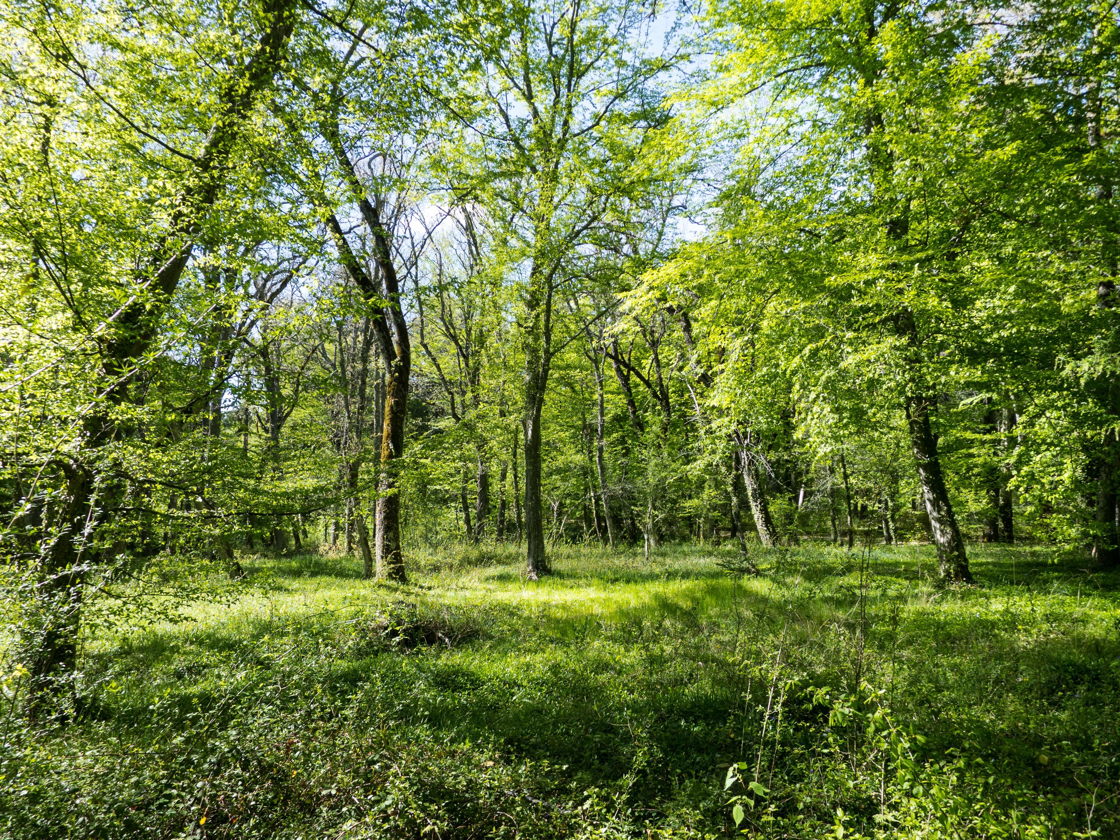 images gratuites paysage arbre la nature herbe branche plante prairie lumi re du soleil. Black Bedroom Furniture Sets. Home Design Ideas
