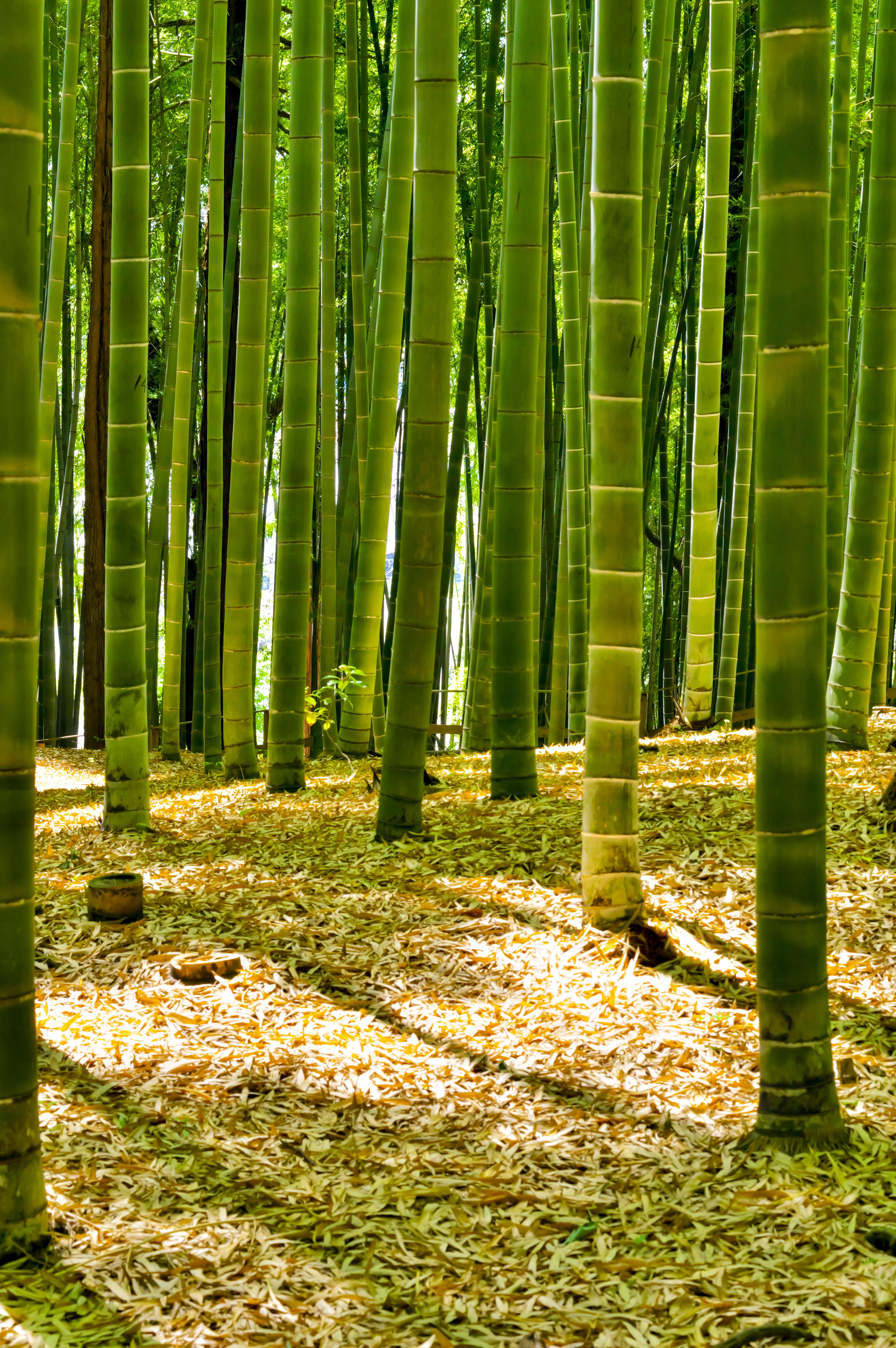 Fotos Gratis Paisaje 225 Rbol Naturaleza C 233 Sped Rama