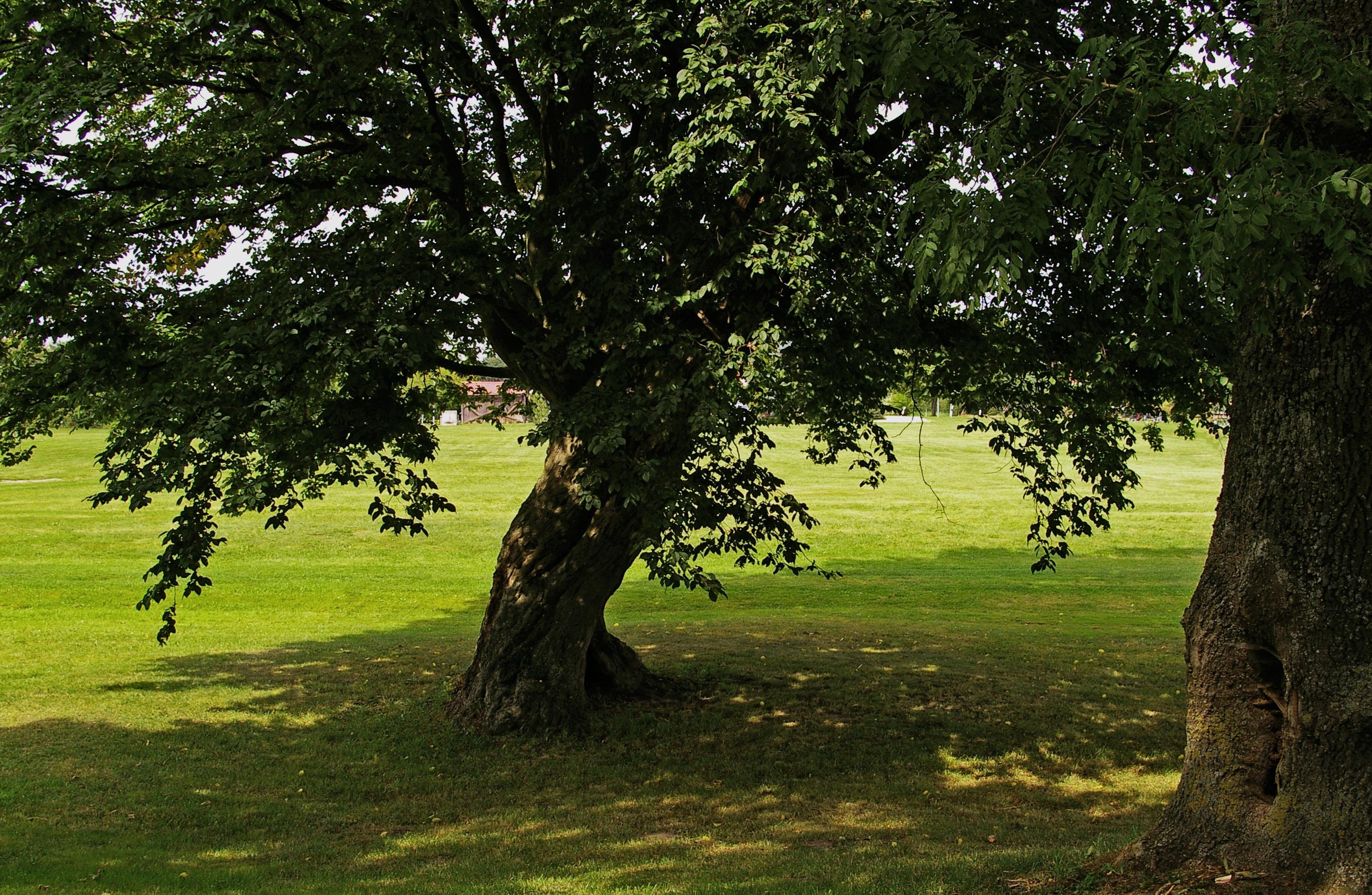 рекомендации картинка про деревьев вблизи пациенты персонал эвакуированы