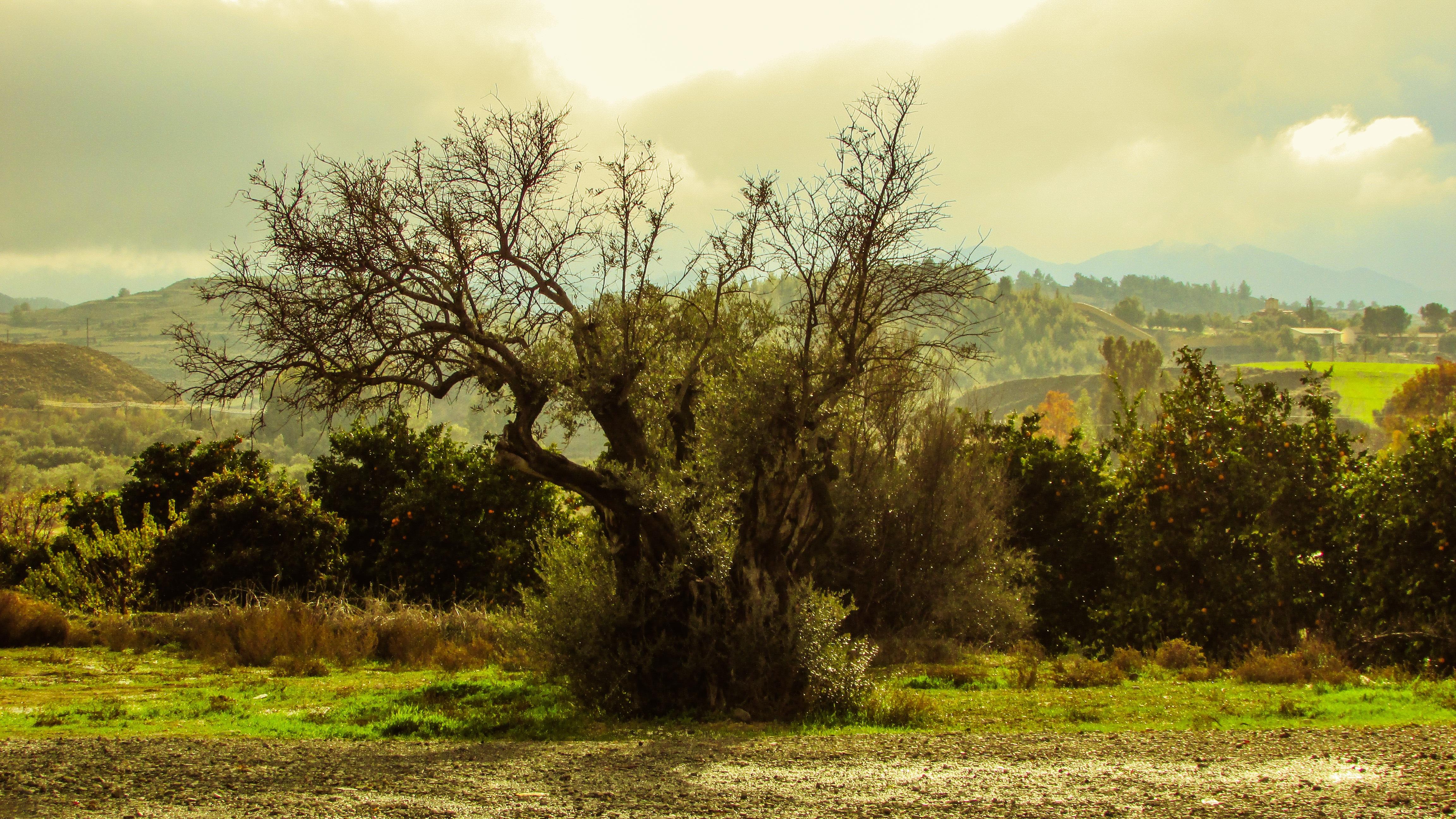 Gambar Pemandangan Alam Hutan Cabang Musim Dingin Awan