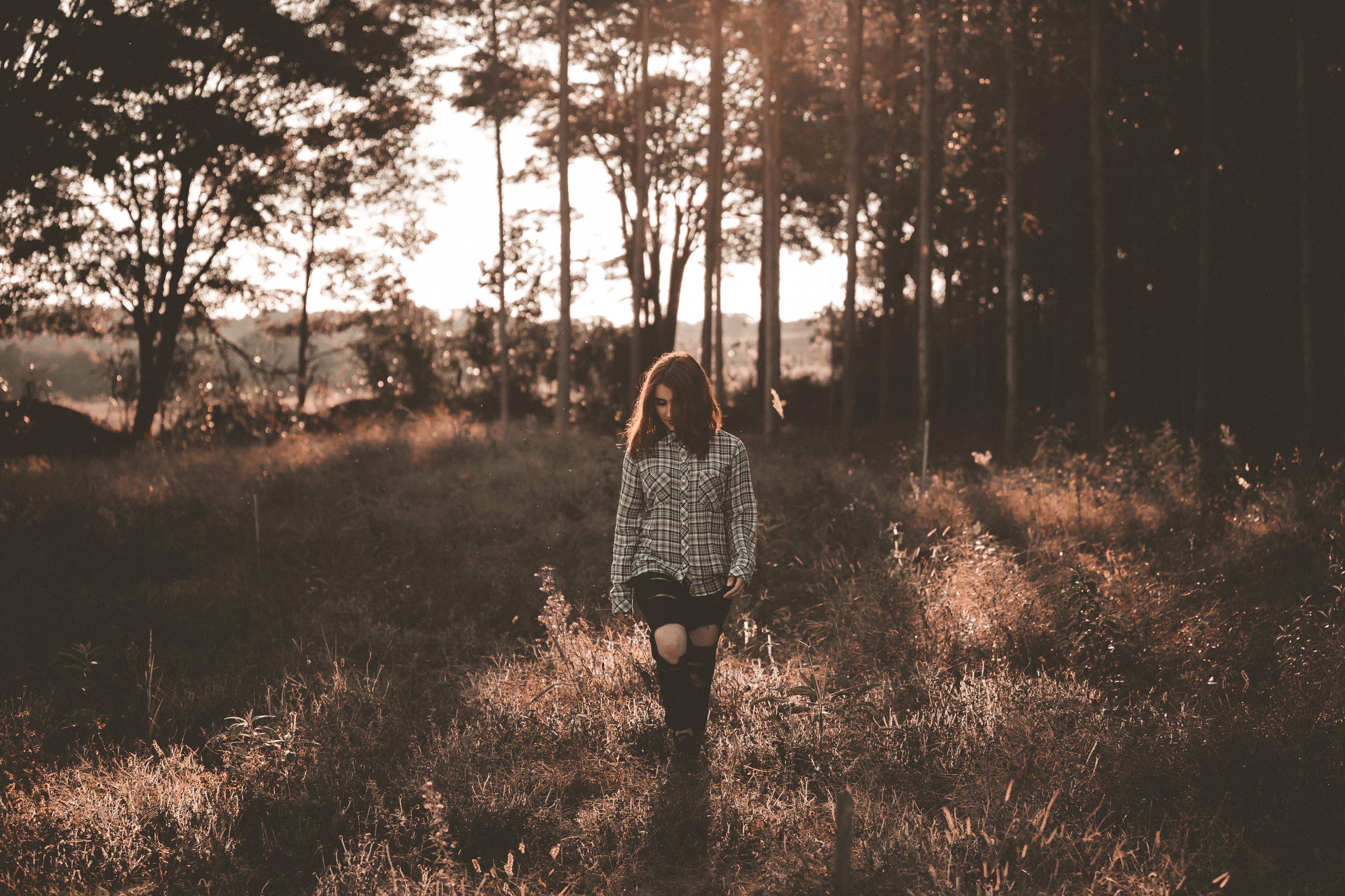Fotoğraf Peyzaj Ağaç Doğa Orman çimen şube Kış ışık