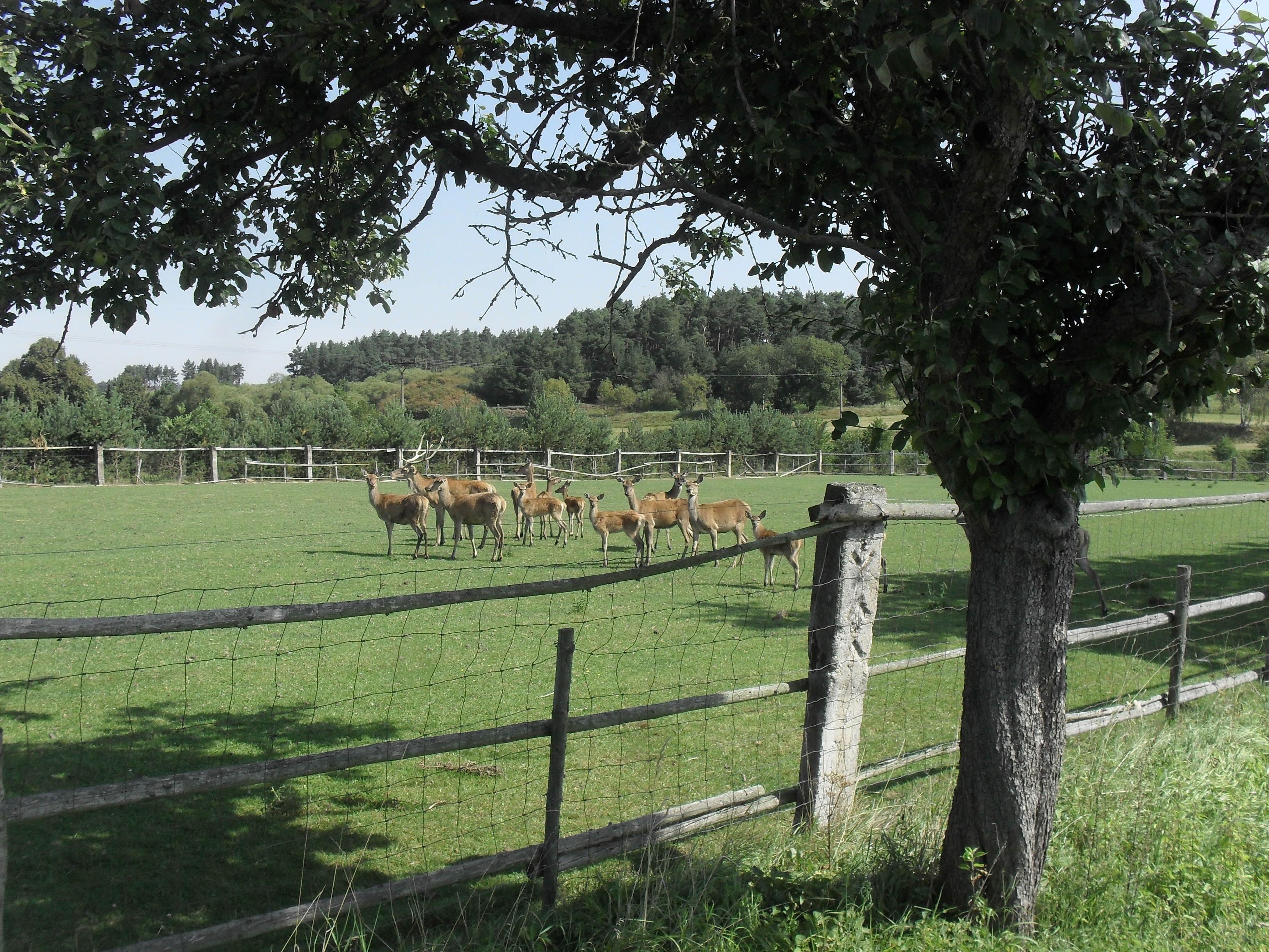 Kostenlose foto Landschaft Baum Natur Wald Gras Zaun