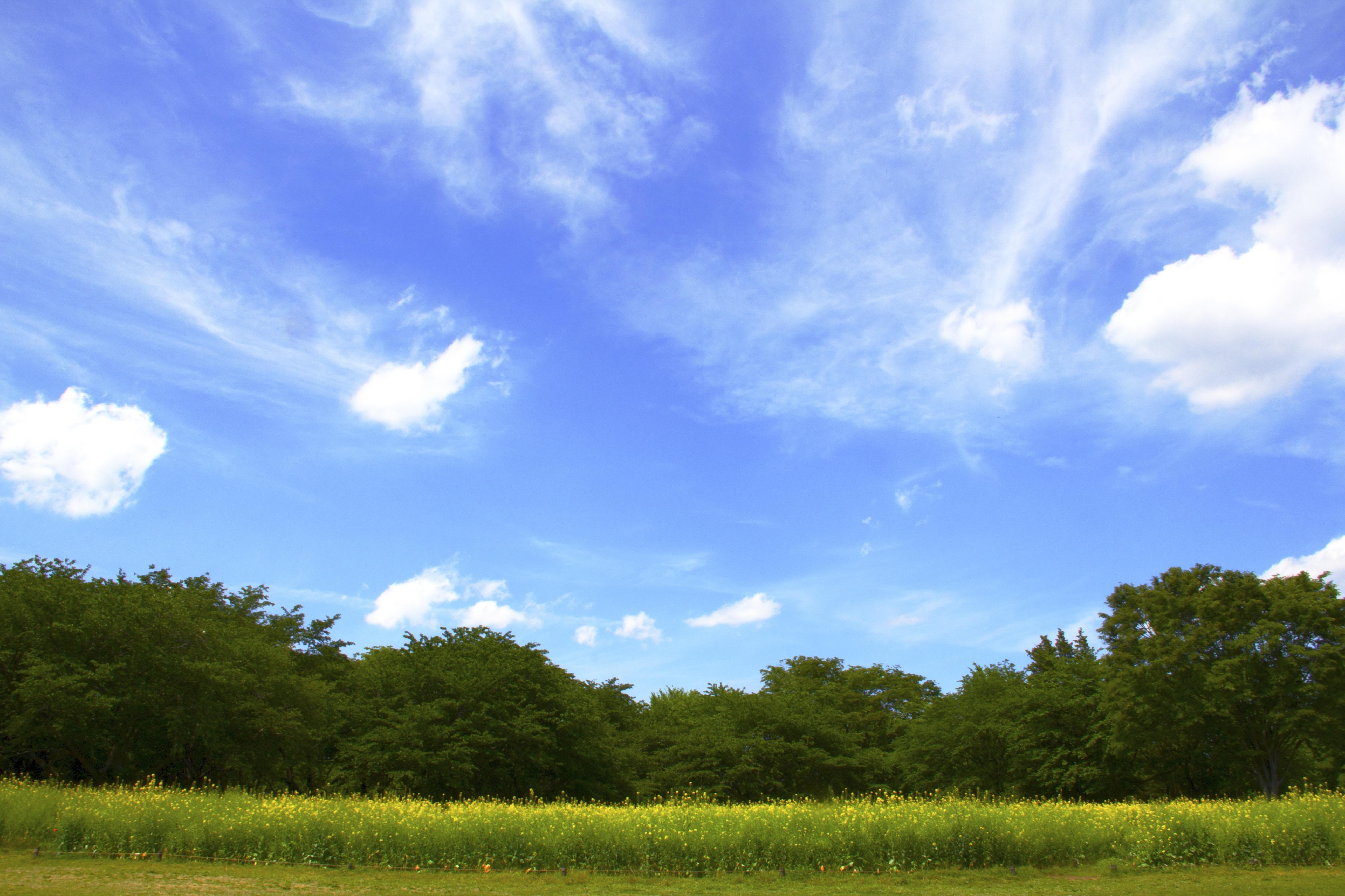 узнать картинки голубое небо природа практически всегда темные