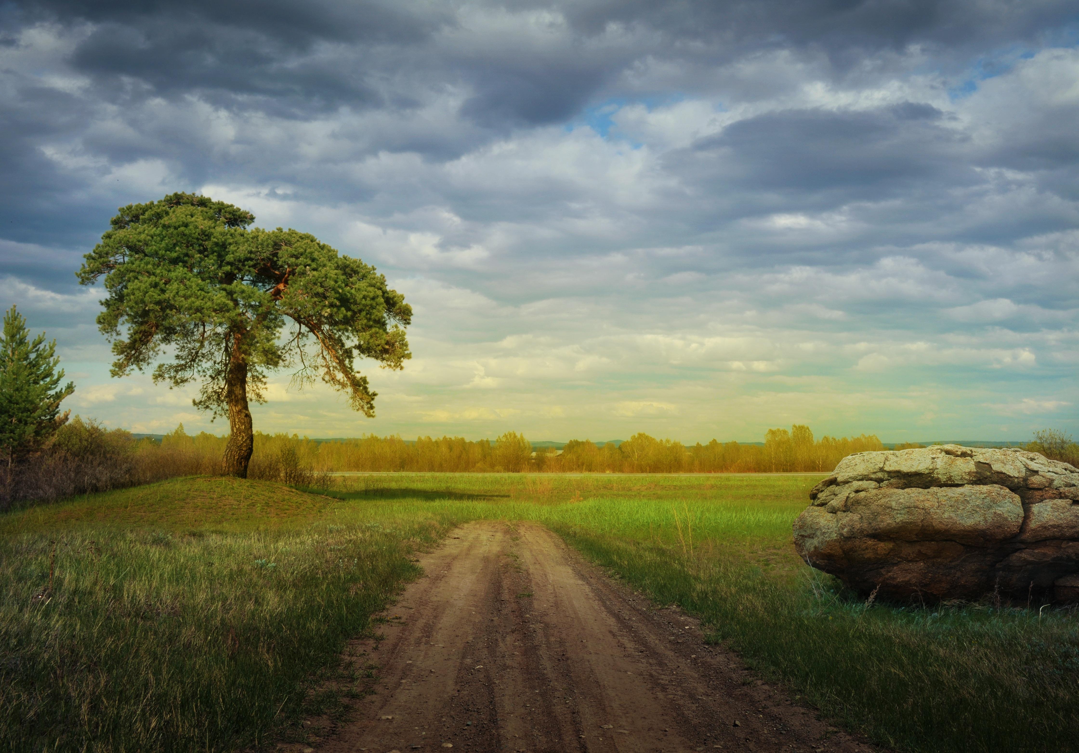 Images gratuites paysage arbre la nature for t herbe for Agence horizon paysage