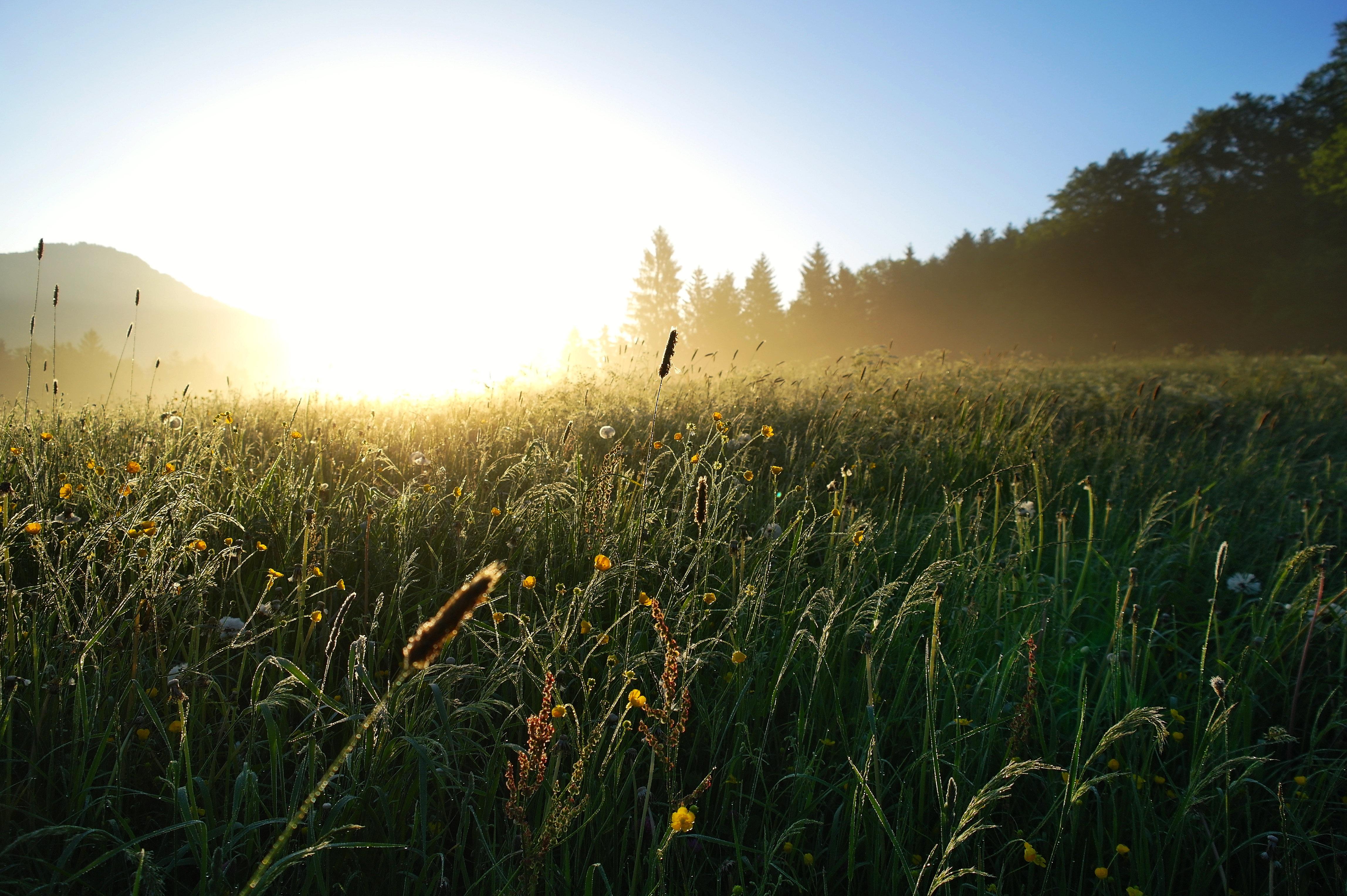 восход солнца в поле фото обоями картинками рабочий