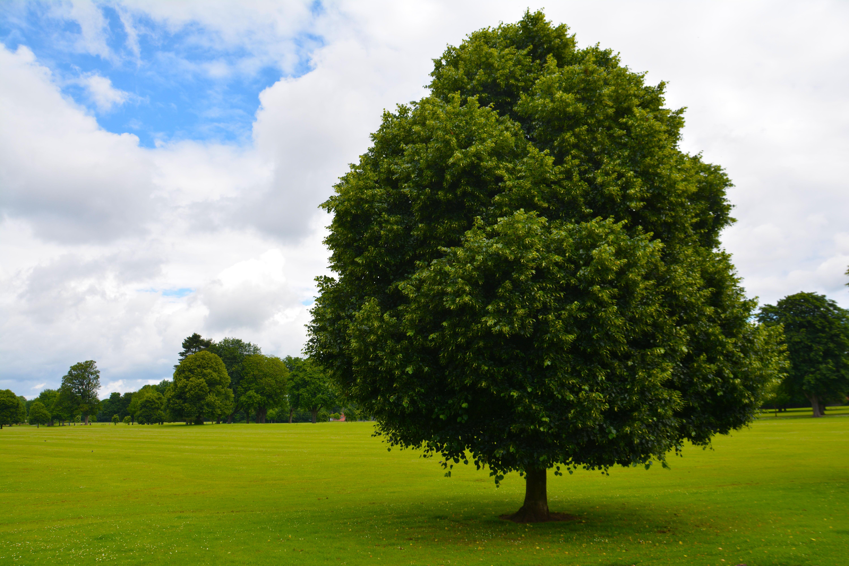 картинки деревья серо зеленые имеет