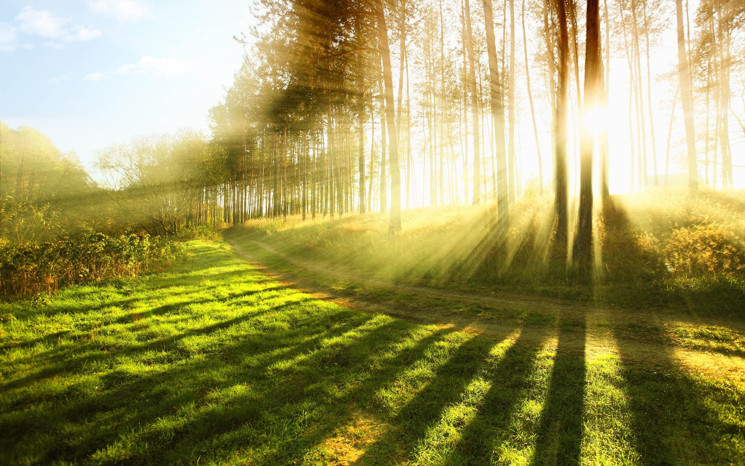 лес деревья солнечные лучи  № 917591  скачать