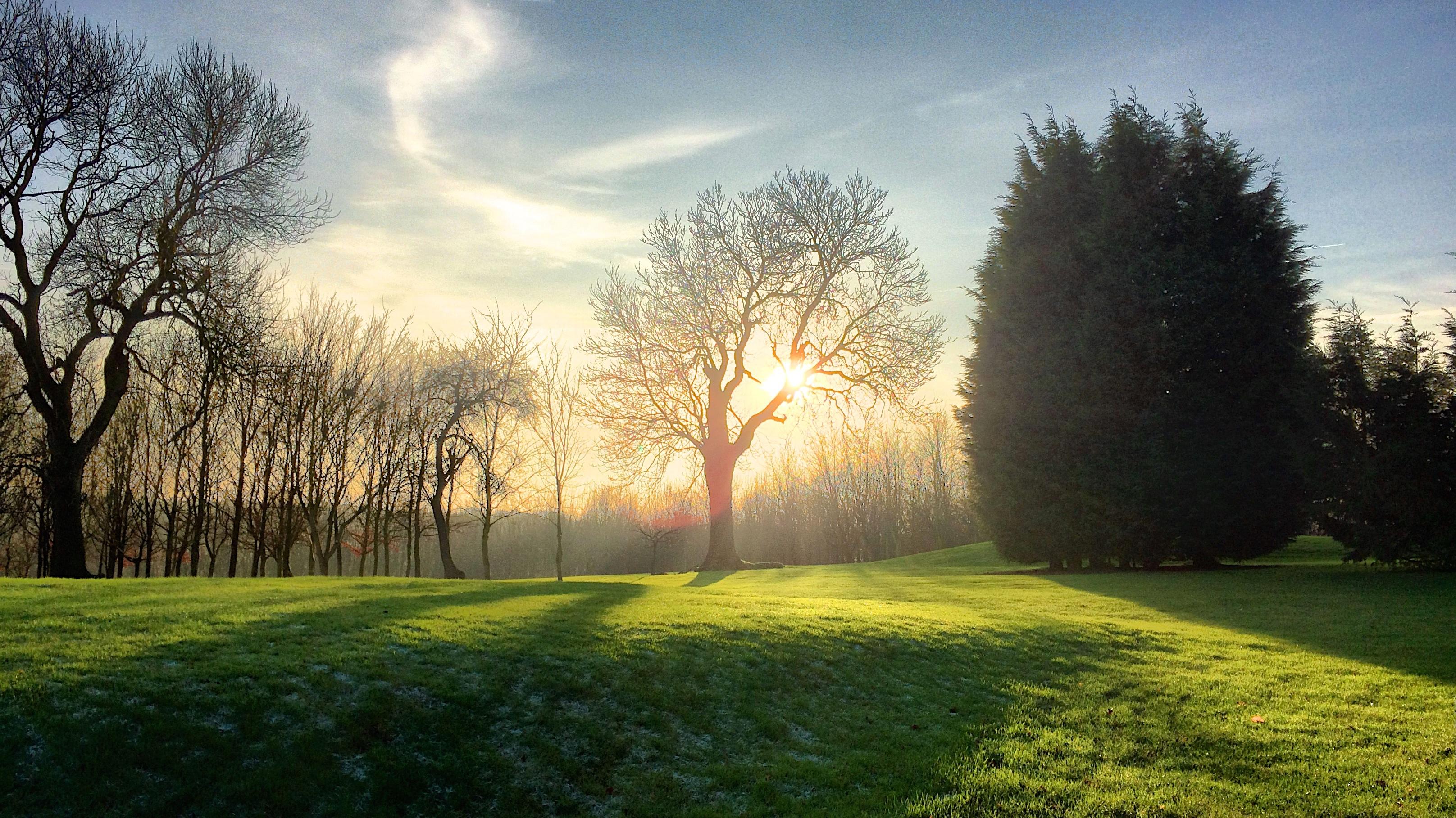 kostenlose foto landschaft baum natur wald gras licht sonnenschein sonne. Black Bedroom Furniture Sets. Home Design Ideas
