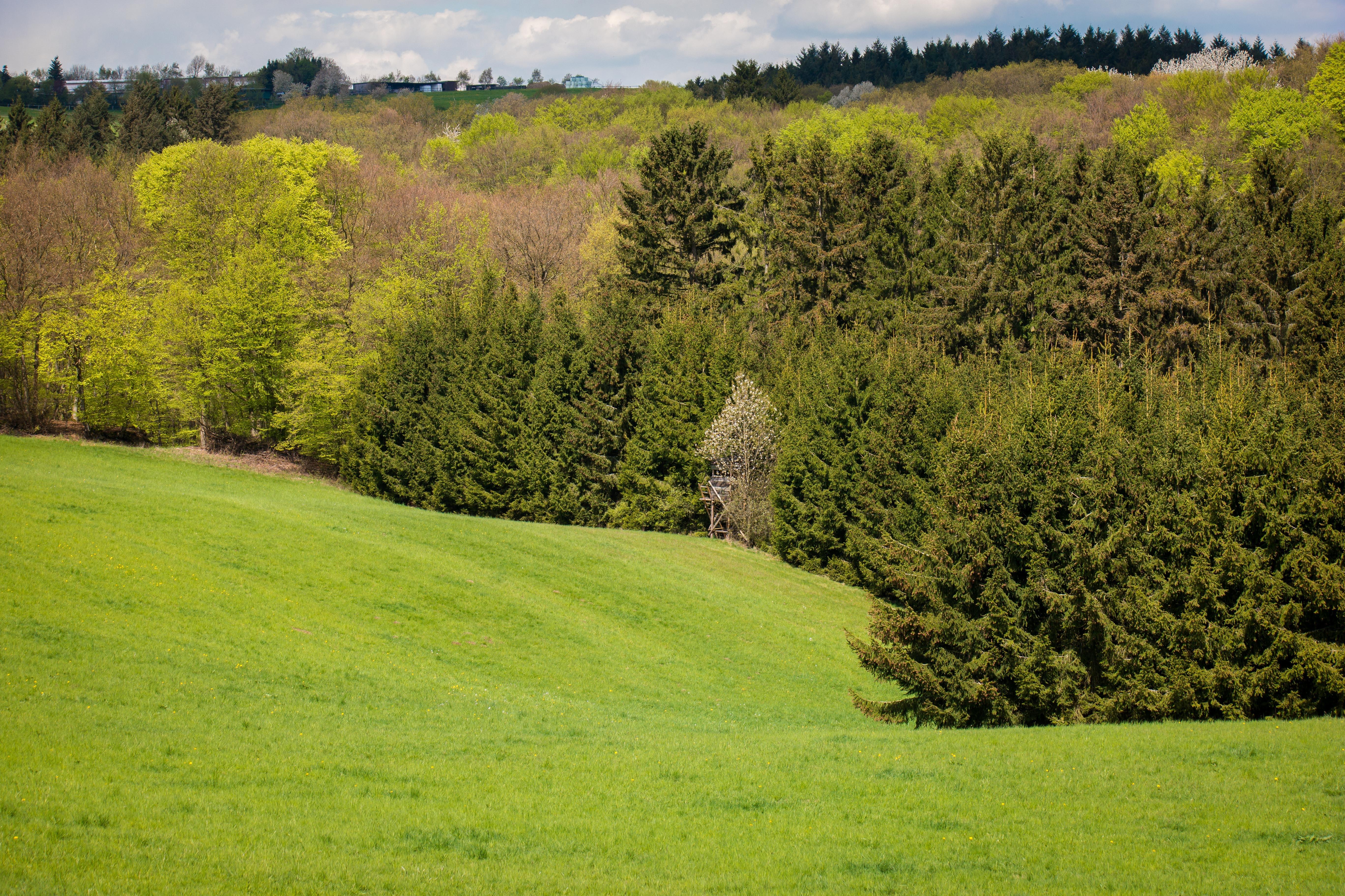 kostenlose foto landschaft baum natur gras berg. Black Bedroom Furniture Sets. Home Design Ideas