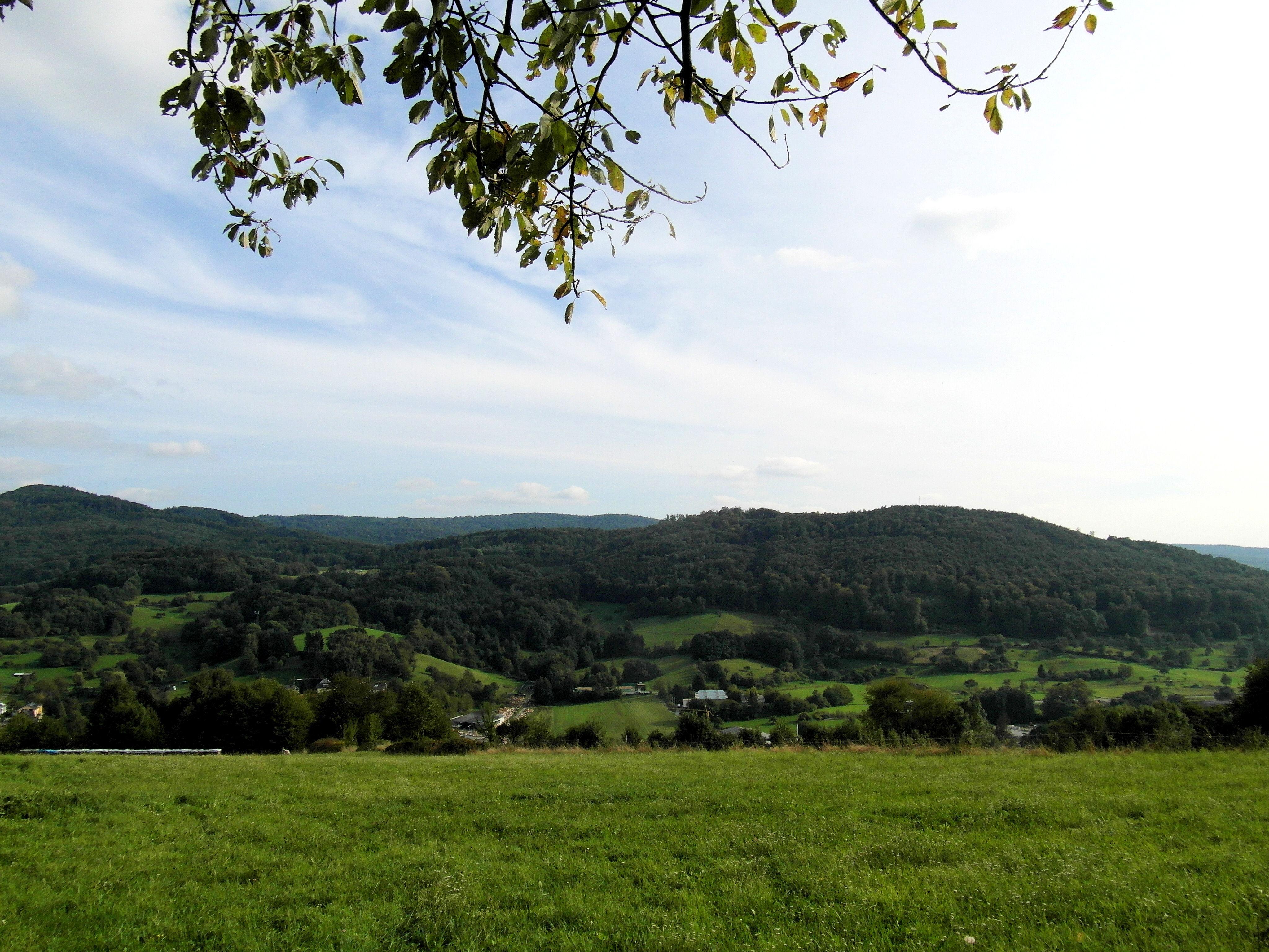 Gambar Pemandangan Pohon Hutan Gunung Menanam Langit
