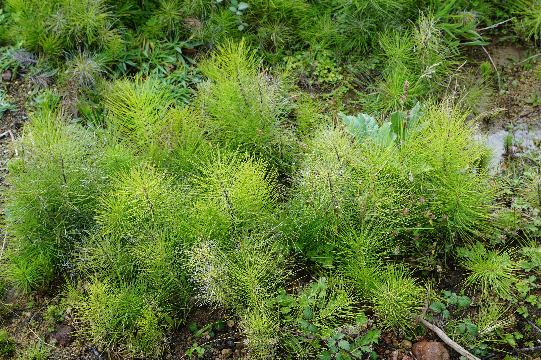 Images gratuites paysage arbre la nature for t herbe for Plante ligneuse