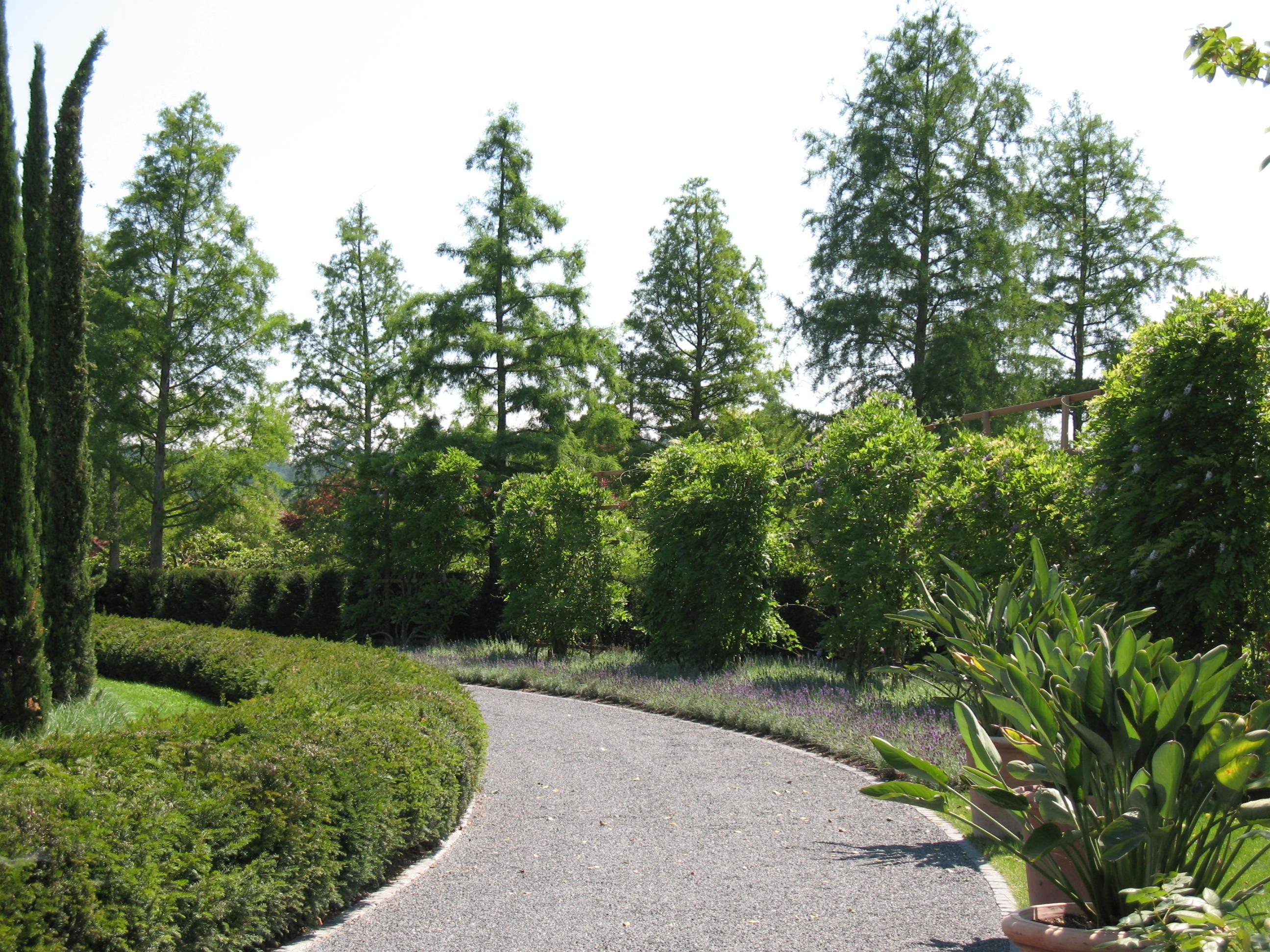 Fotos gratis paisaje rbol naturaleza bosque c sped for Arboles de jardin