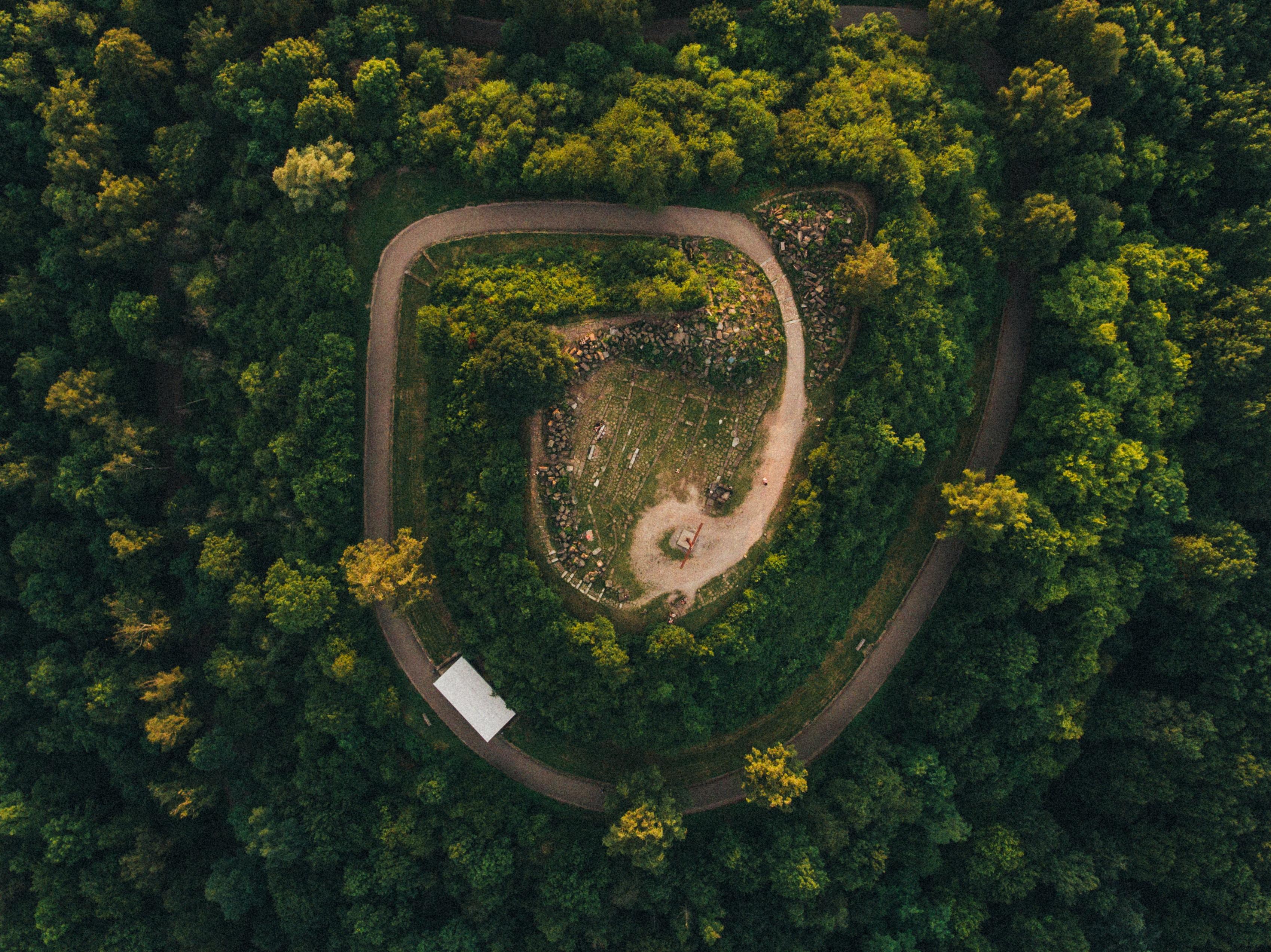 Gambar Pemandangan Pohon Alam Hutan Rumput Menanam Langit