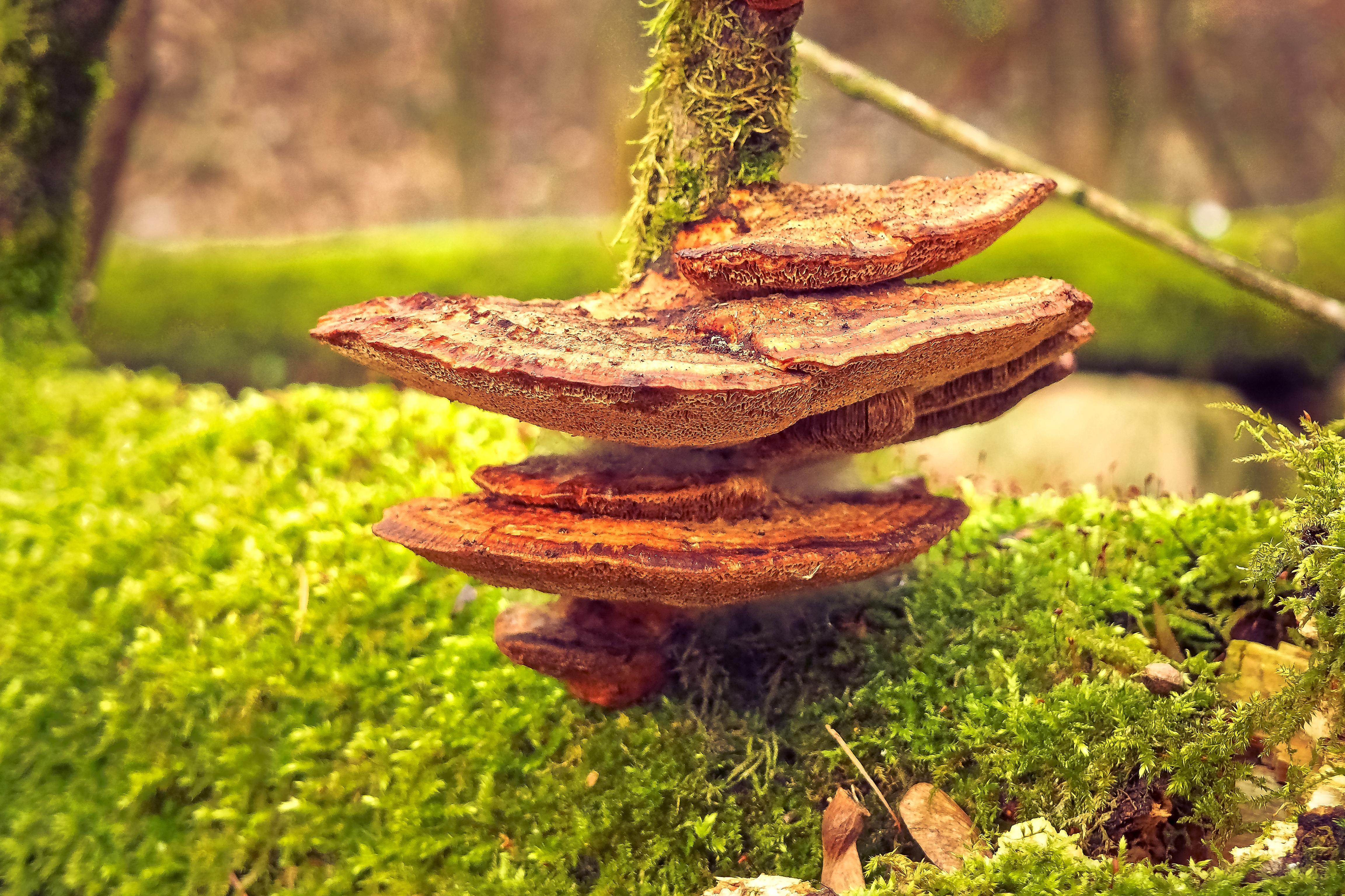 Fotos gratis paisaje bosque c sped estructura madera for Hongos en el cesped jardin