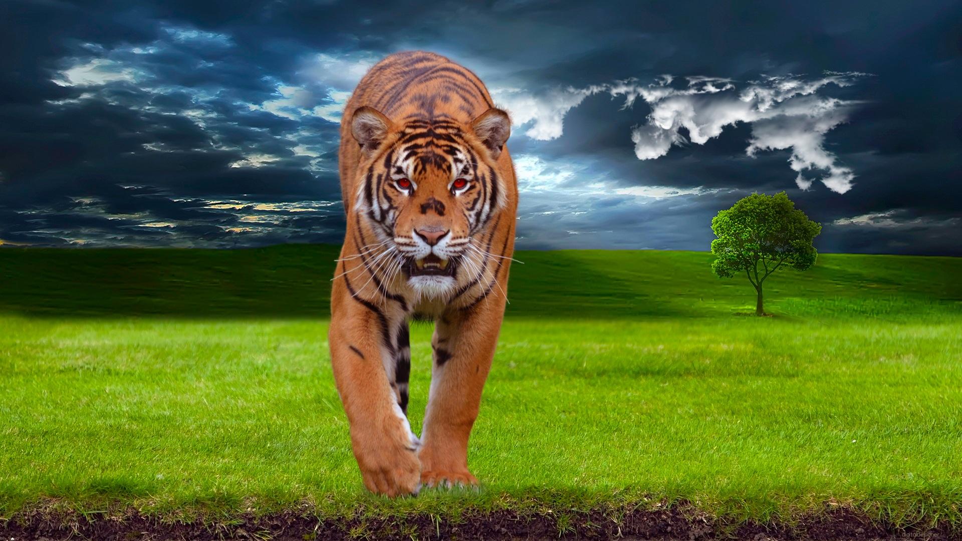 8k Animal Wallpaper Download: Free Images : Landscape, Tree, Nature, Forest, Grass