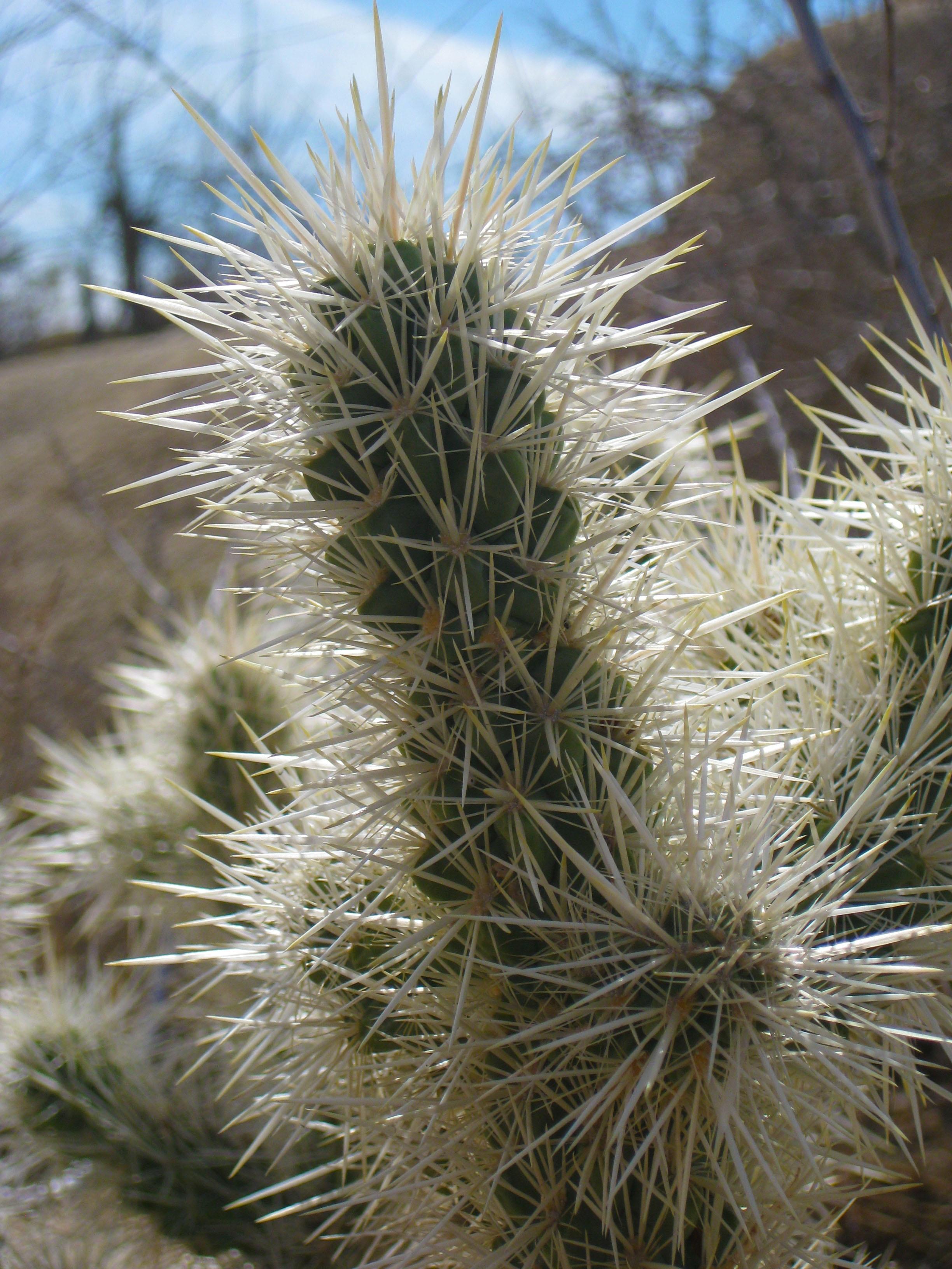 free images landscape nature wilderness cactus sky sunset
