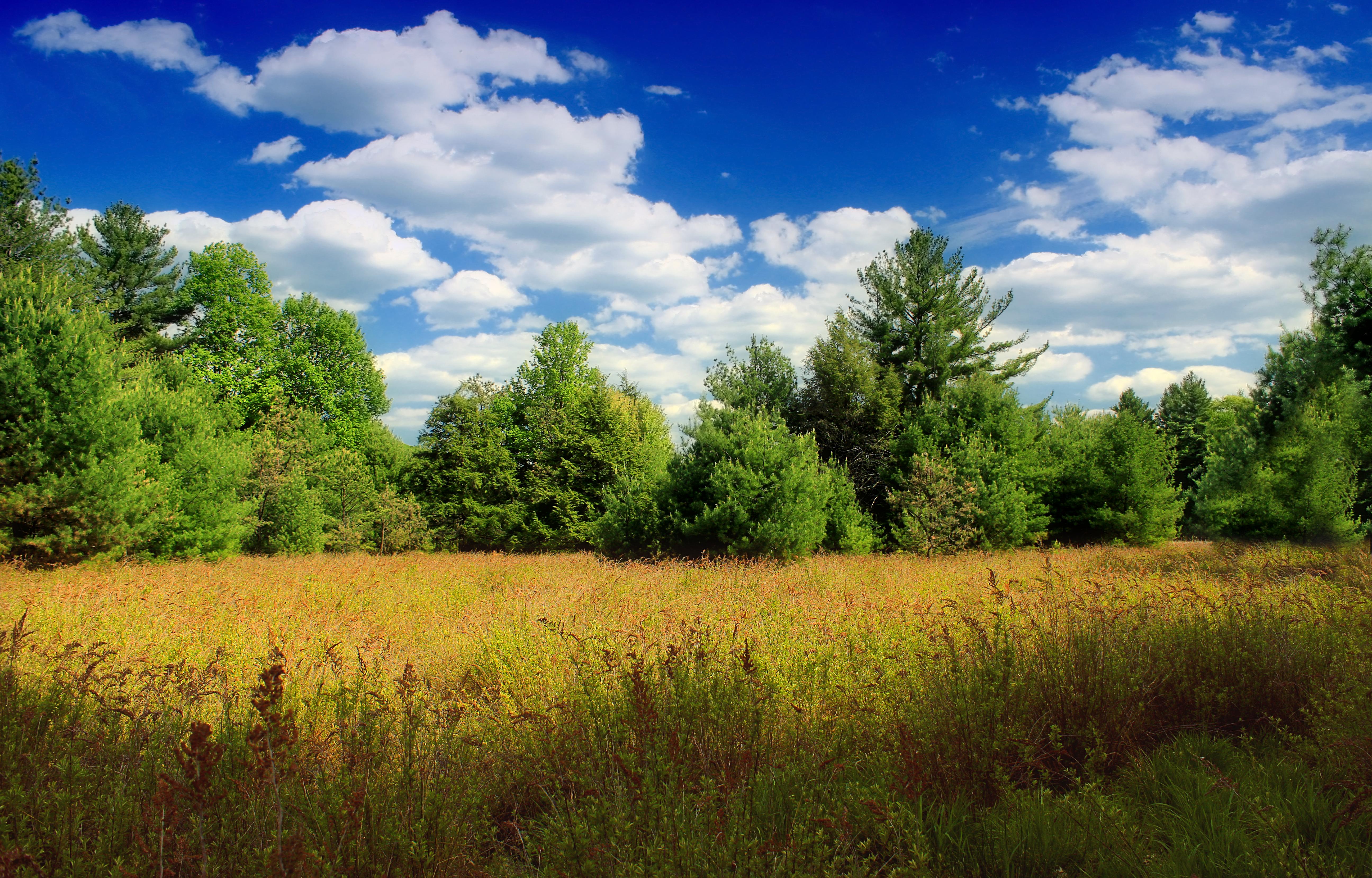 Поле лес небо картинка