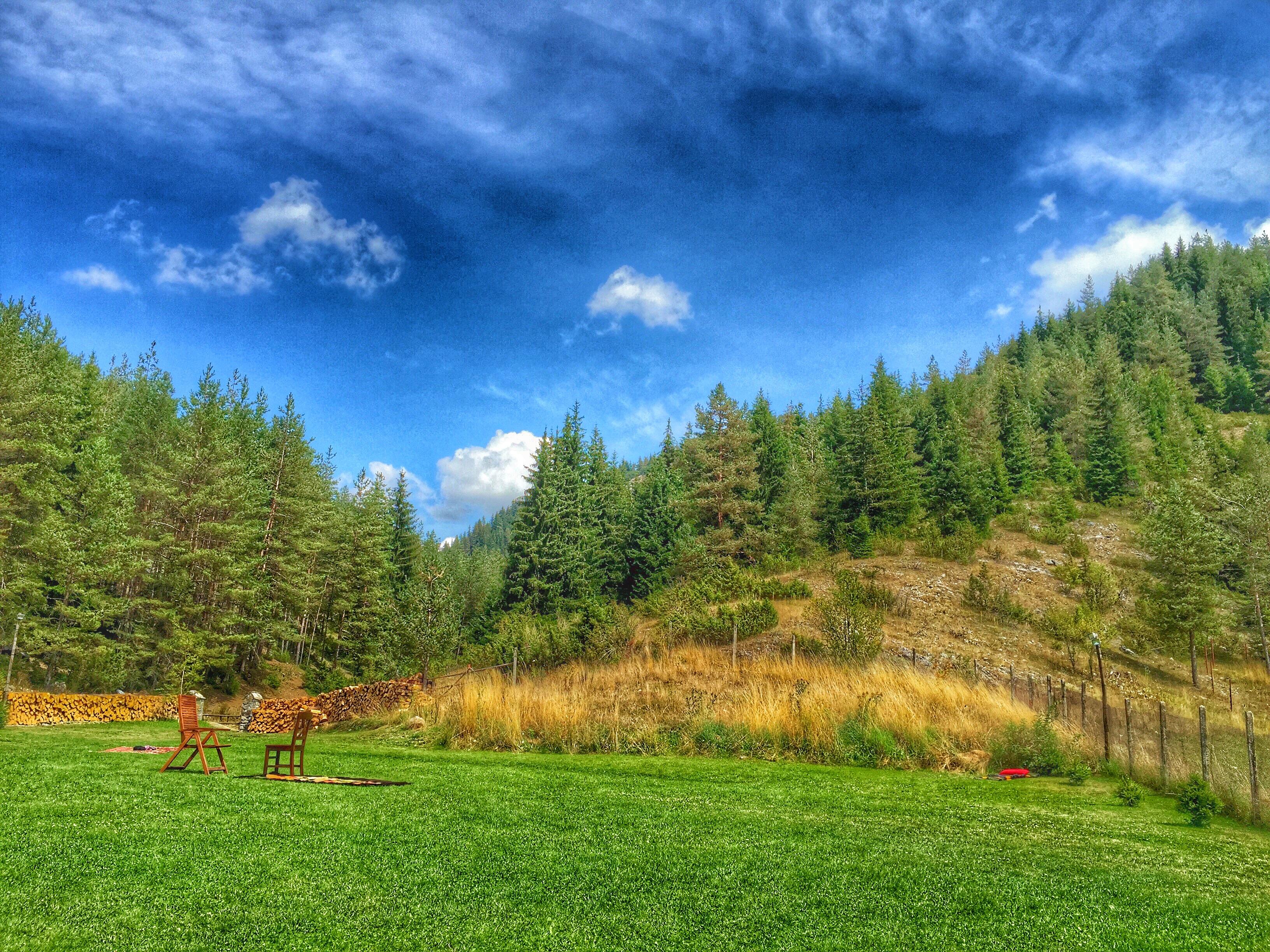 других лес с лугами картинки день воздушного