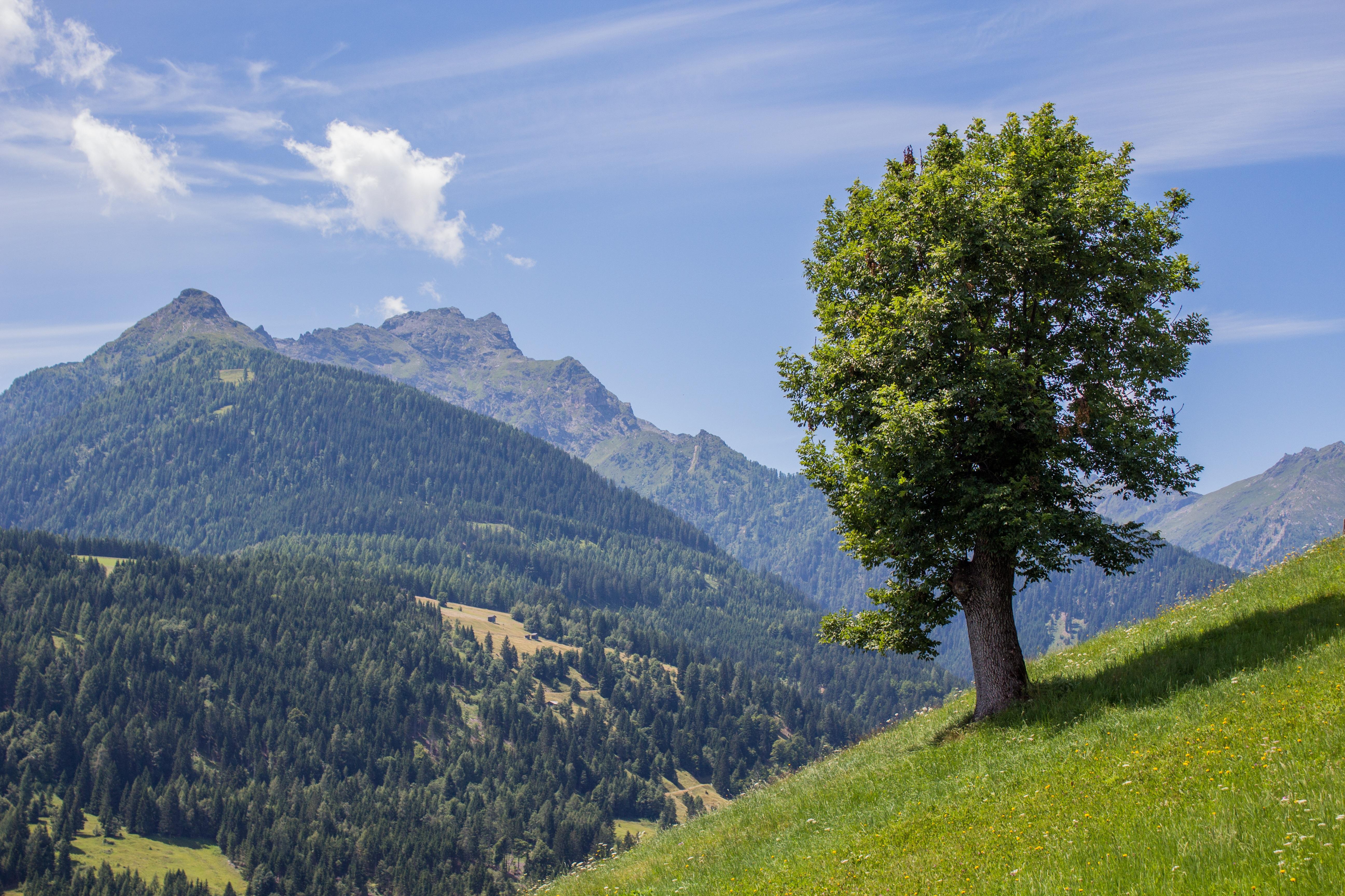 images gratuites paysage arbre la nature for t herbe r gion sauvage montagne nuage. Black Bedroom Furniture Sets. Home Design Ideas