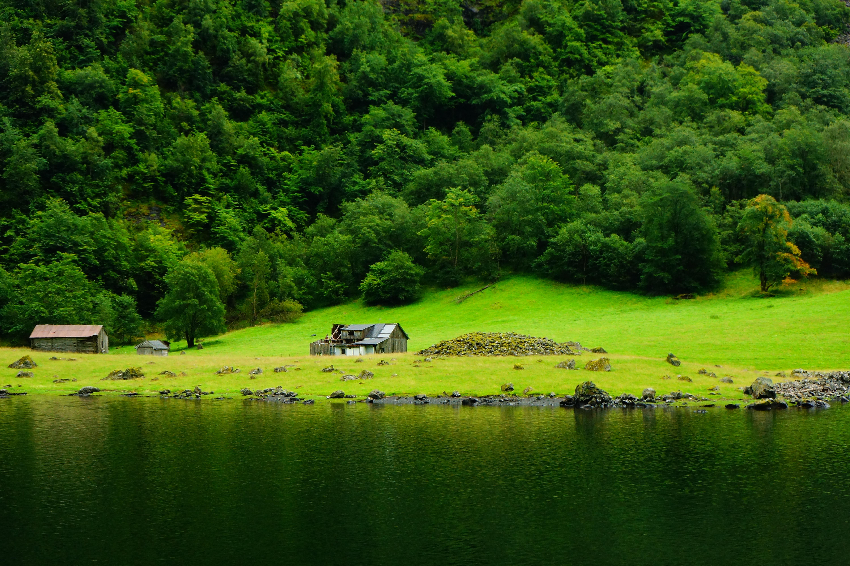 Images gratuites paysage arbre la nature for t herbe for Paysage vert