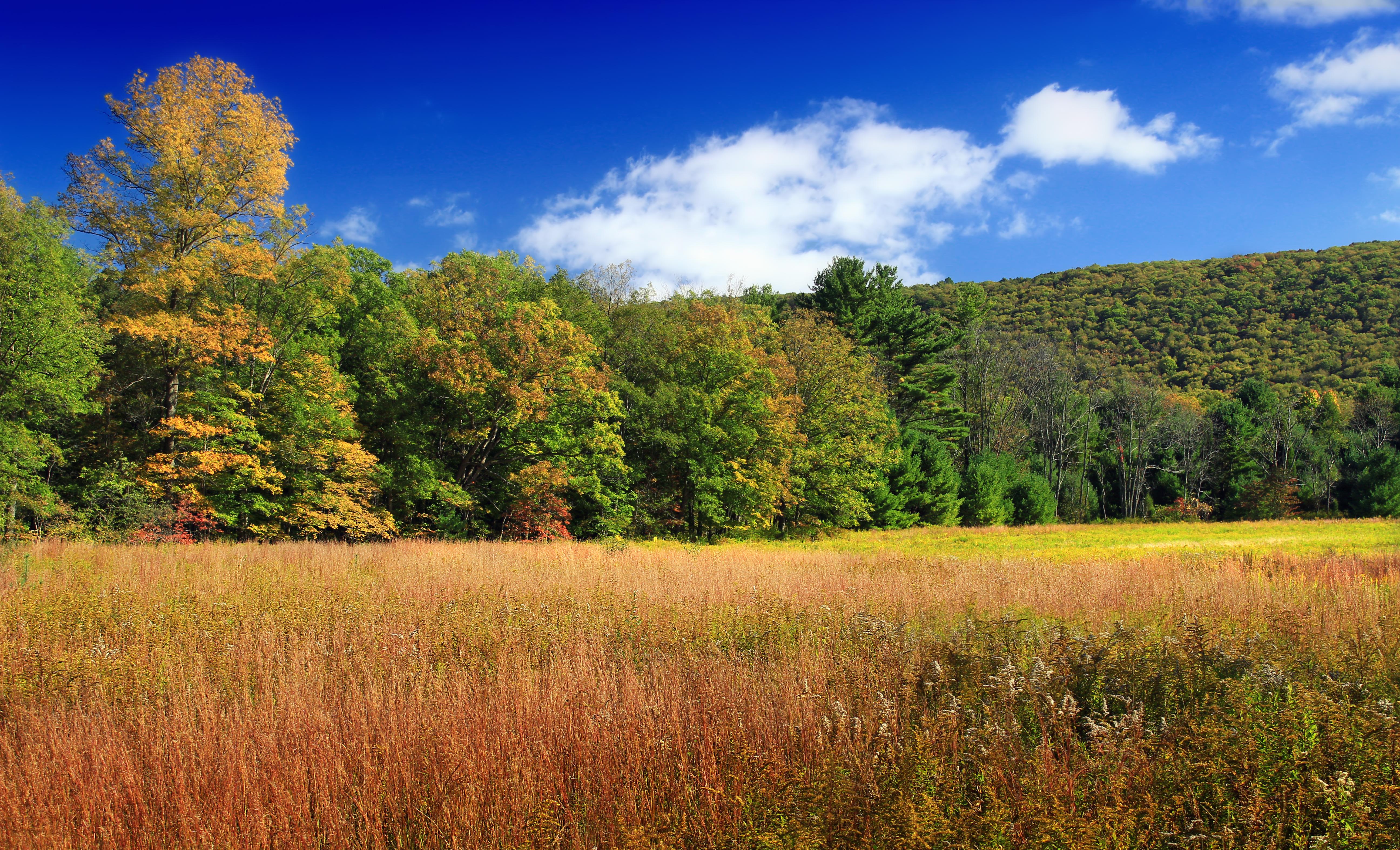 как картинки с лиственным лесом поляне этому случаю британская