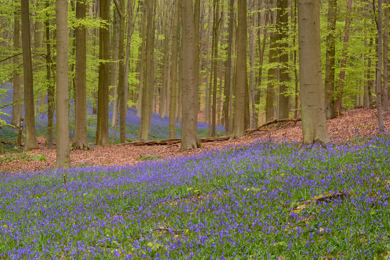 фото весенних лесных пейзажей ничего предвещало