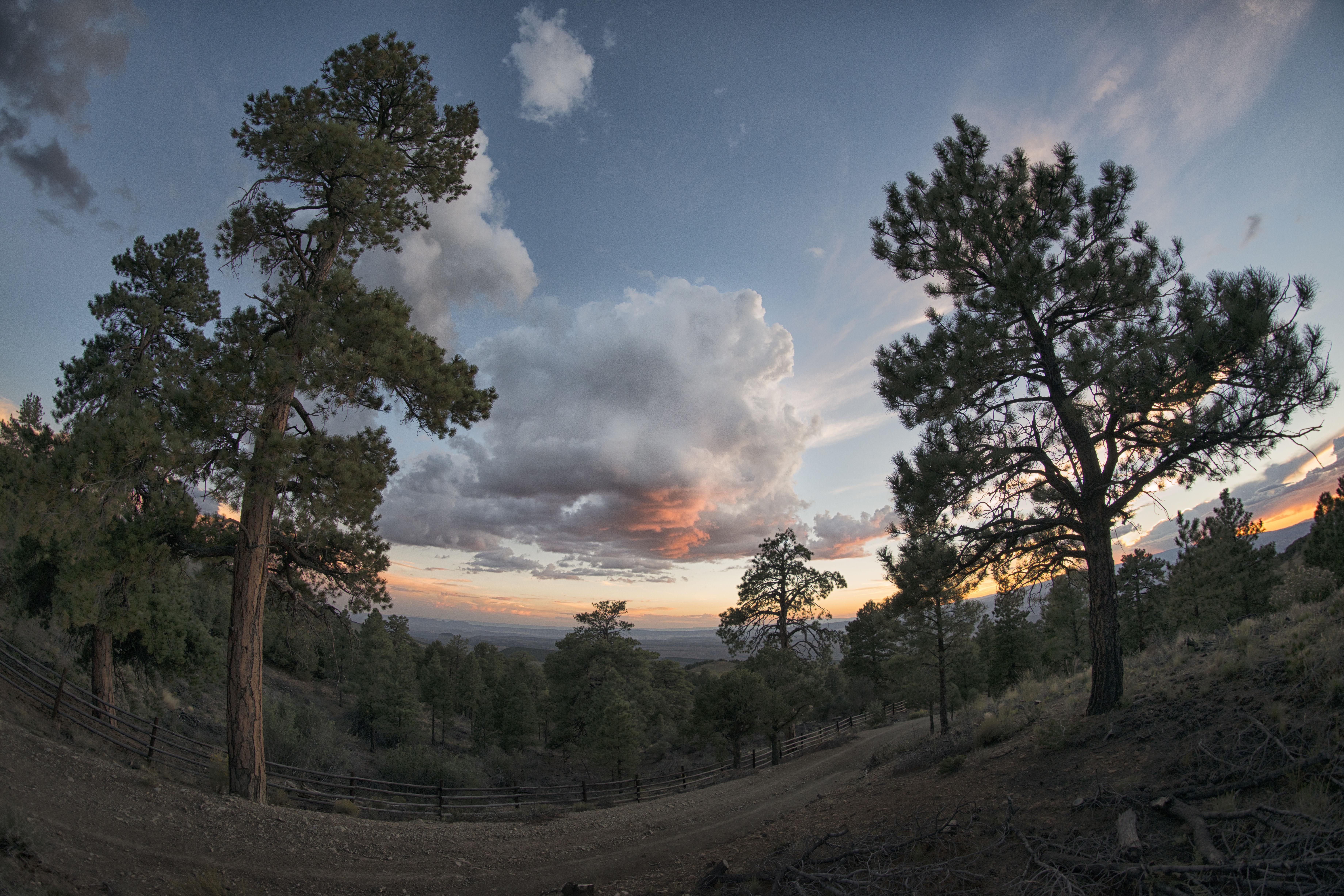 Gambar Pemandangan Pohon Alam Hutan Horison Gurun