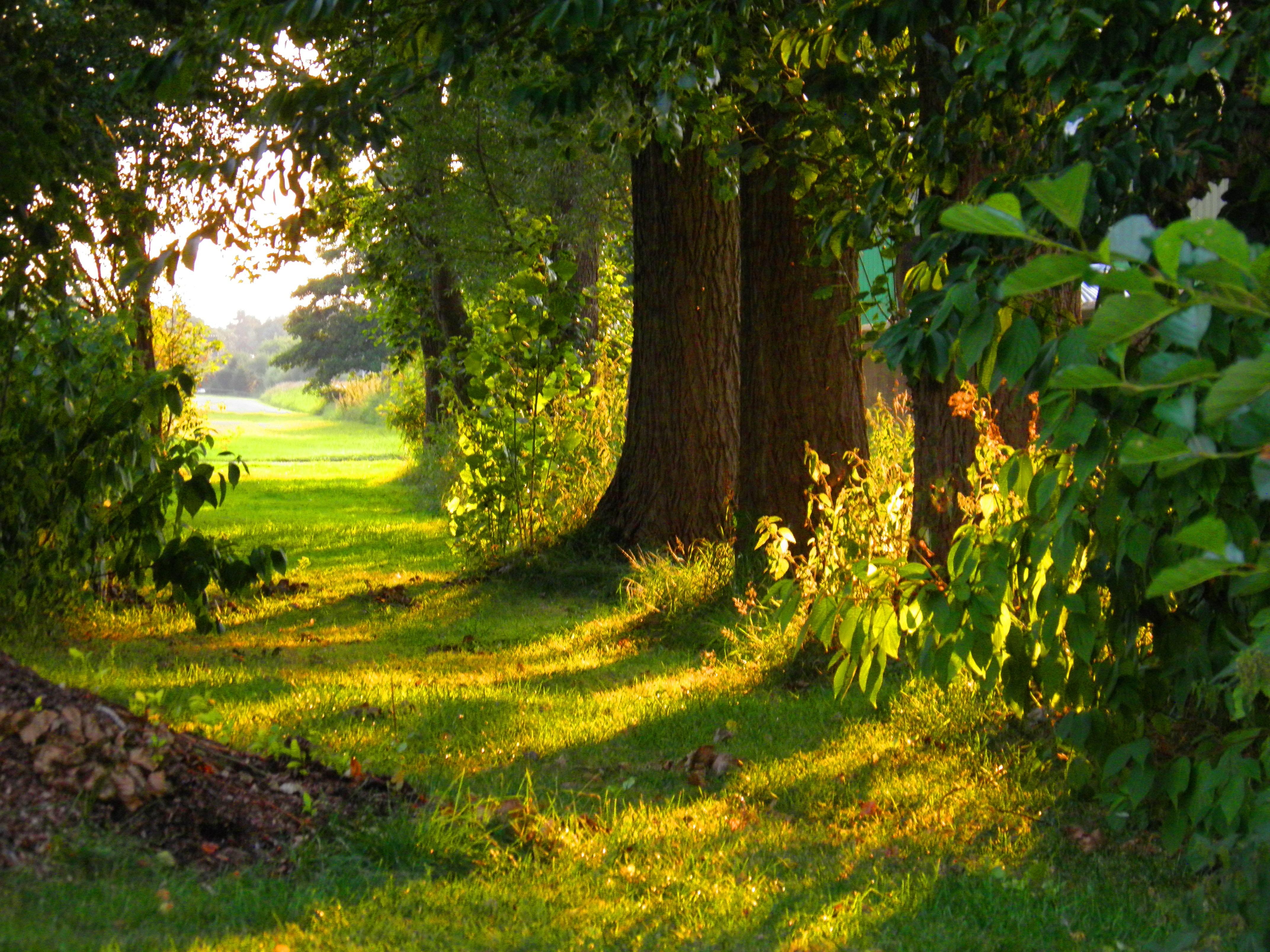 Banco de imagens panorama natureza floresta por do sol gramado prado luz solar folha for El super garden grove