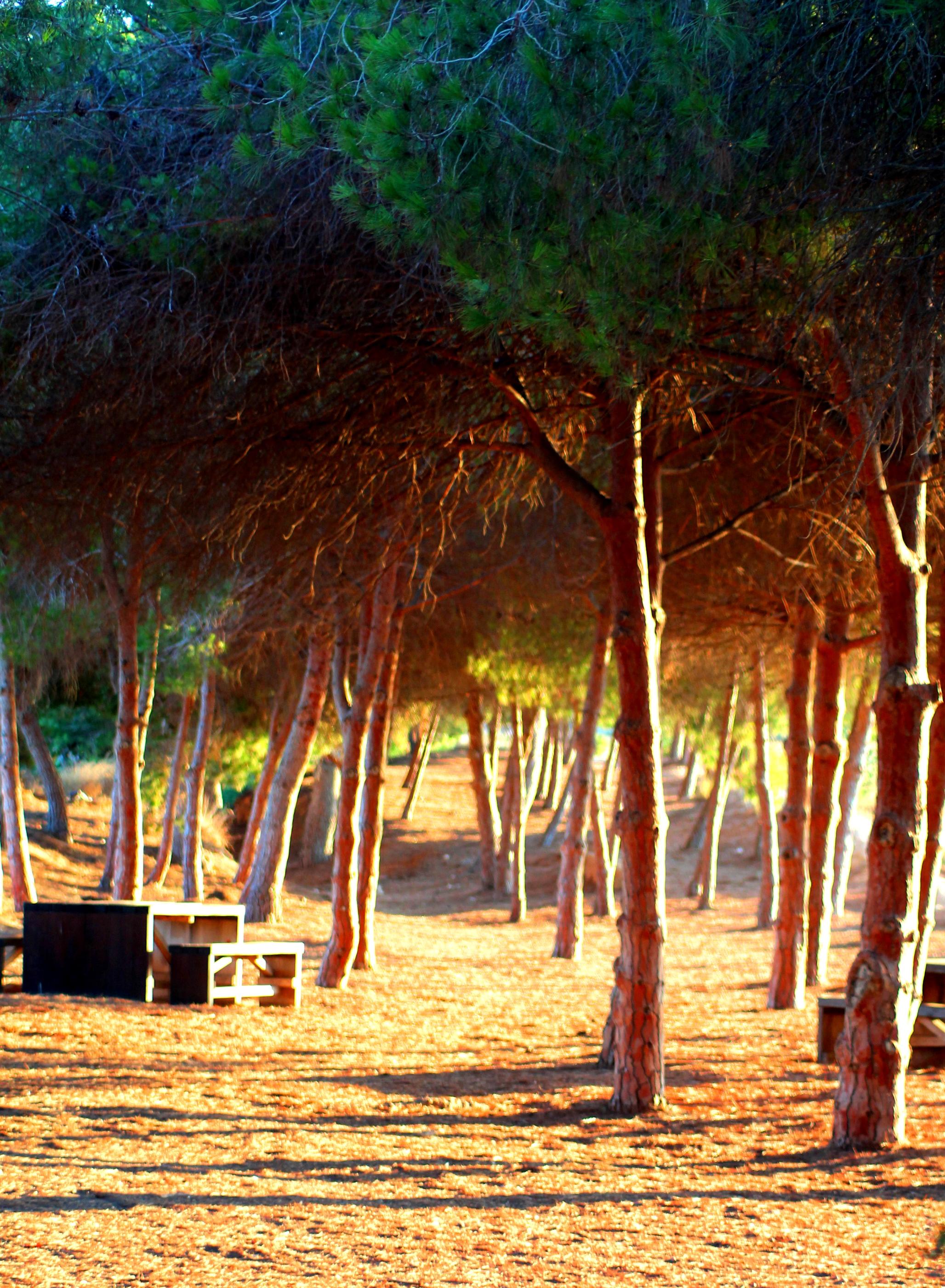 Free Images : landscape, tree, nature, forest, light, sunset ...