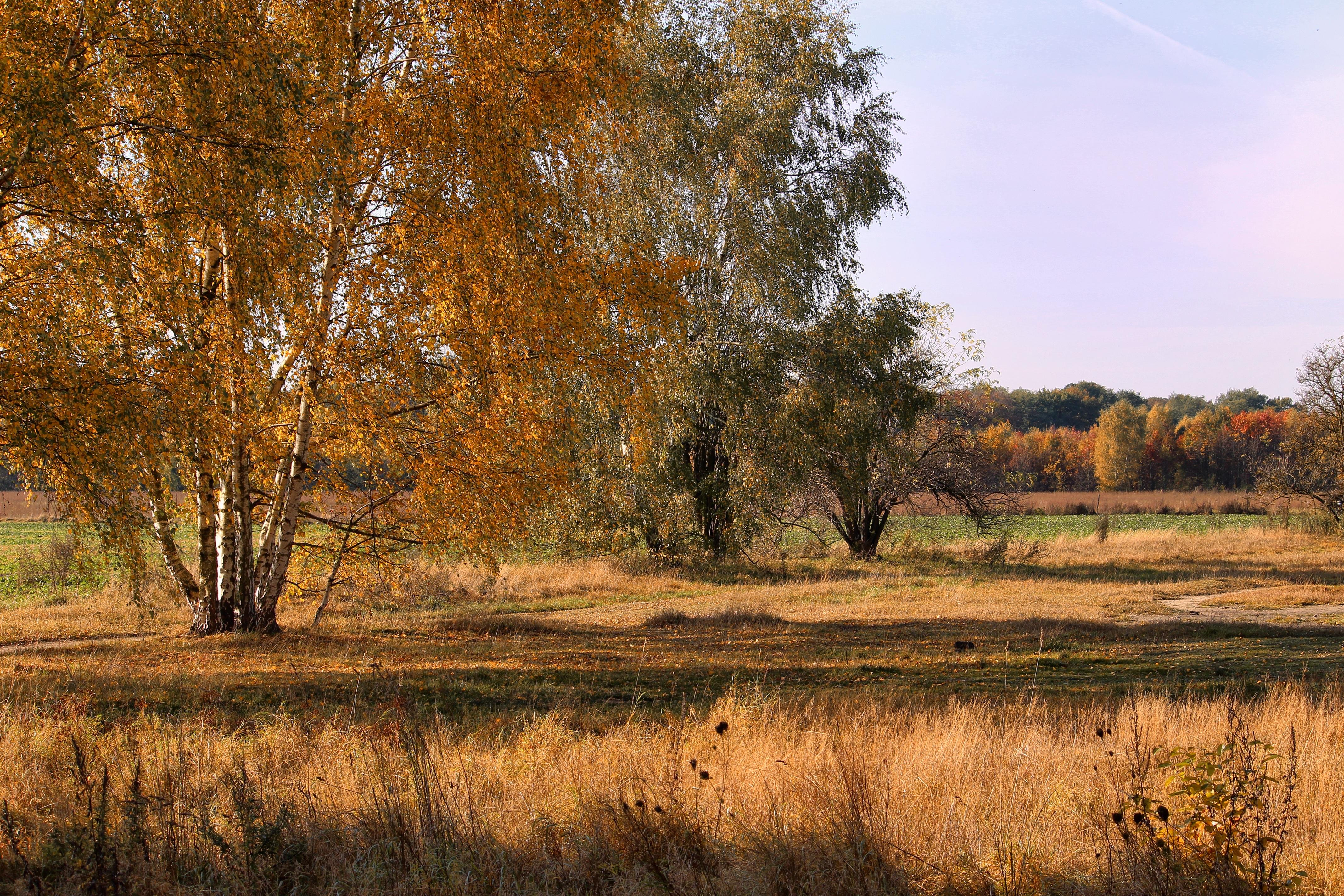 Gambar Pemandangan Pohon Alam Rawa Gurun Menanam Bidang