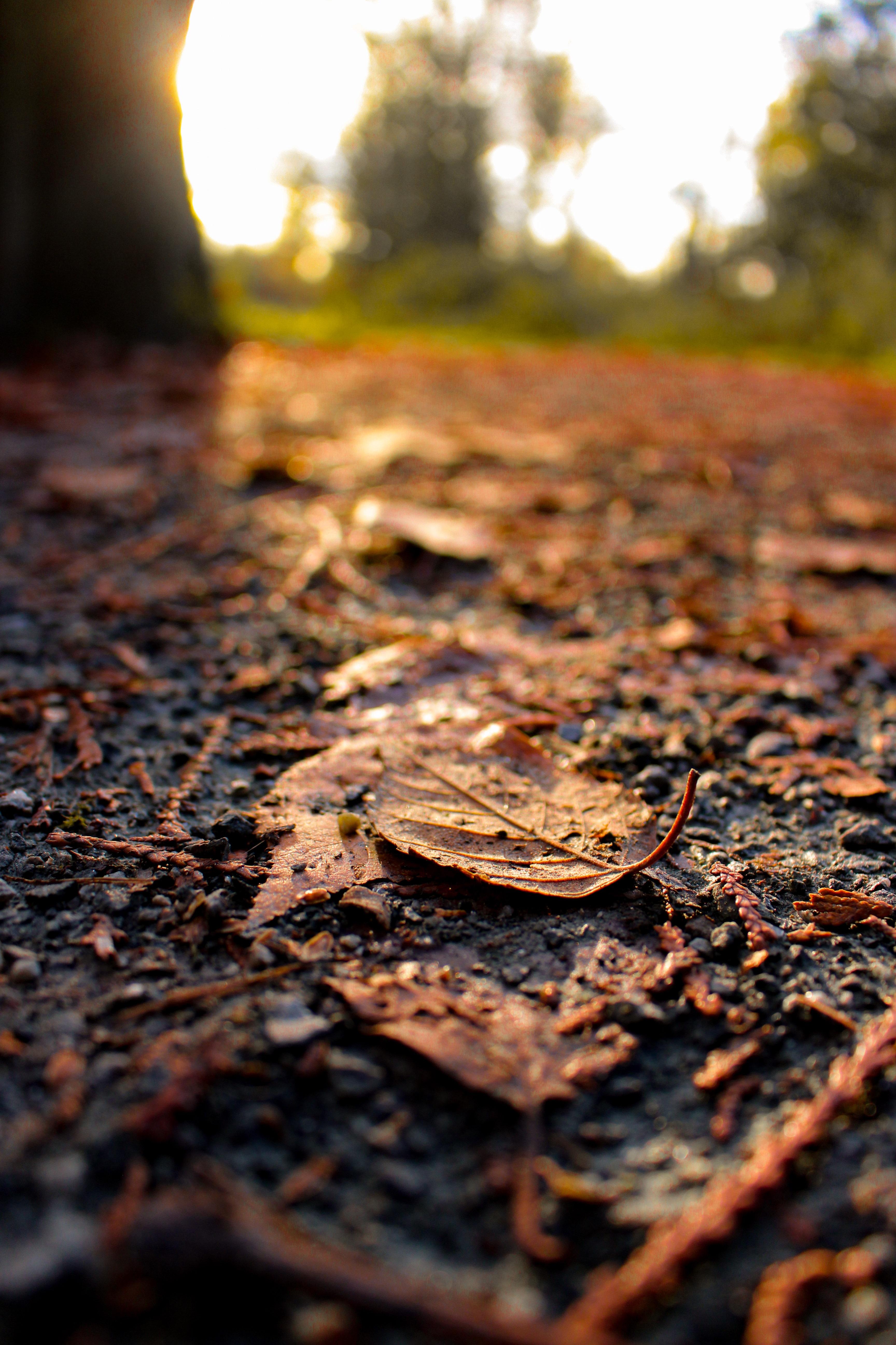 Gambar Pemandangan Pohon Alam Hutan Outdoor Cahaya Menanam Matahari Terbenam Sinar