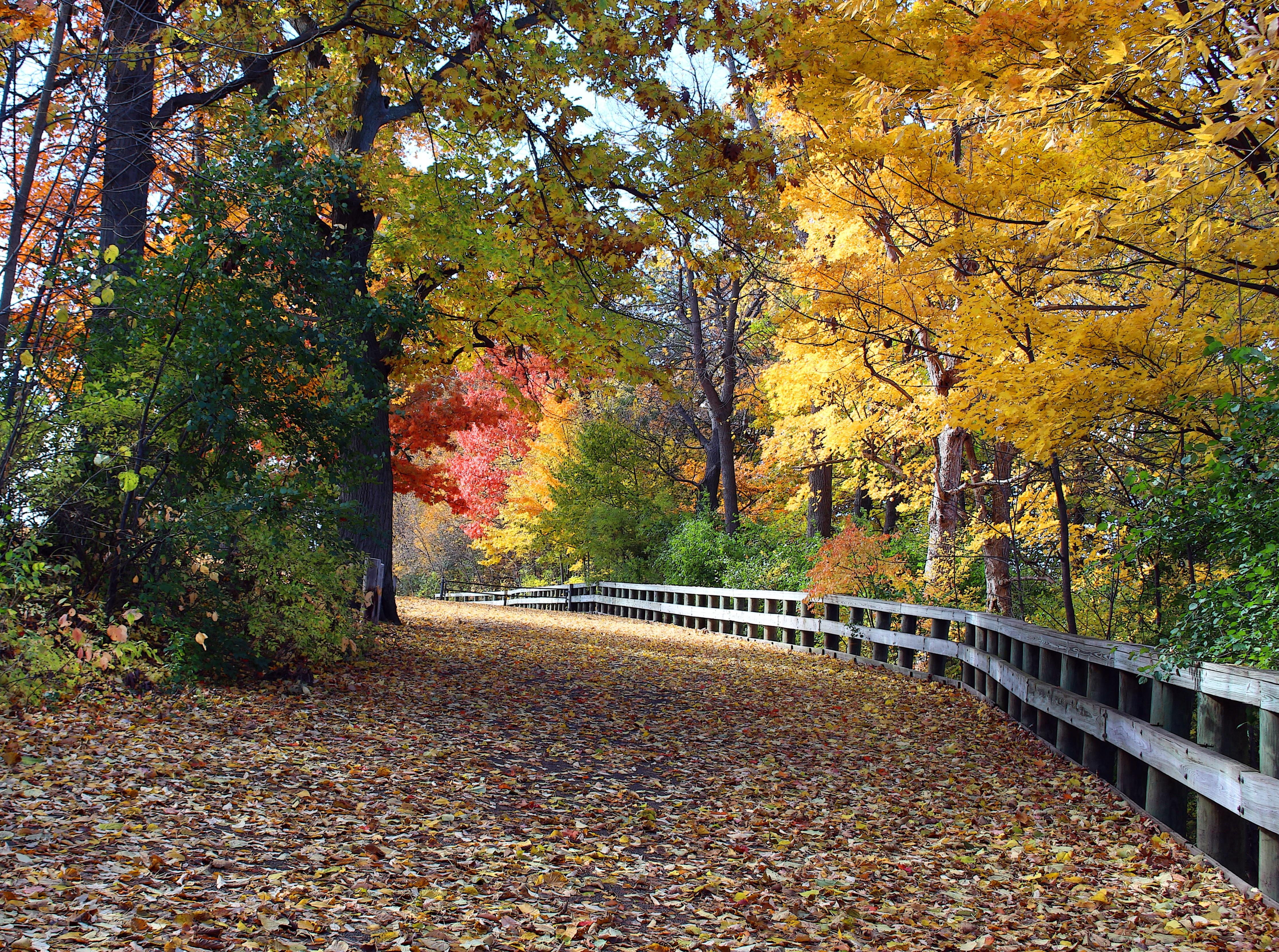 101+ Gambar Pemandangan Warna Kuning Paling Bagus