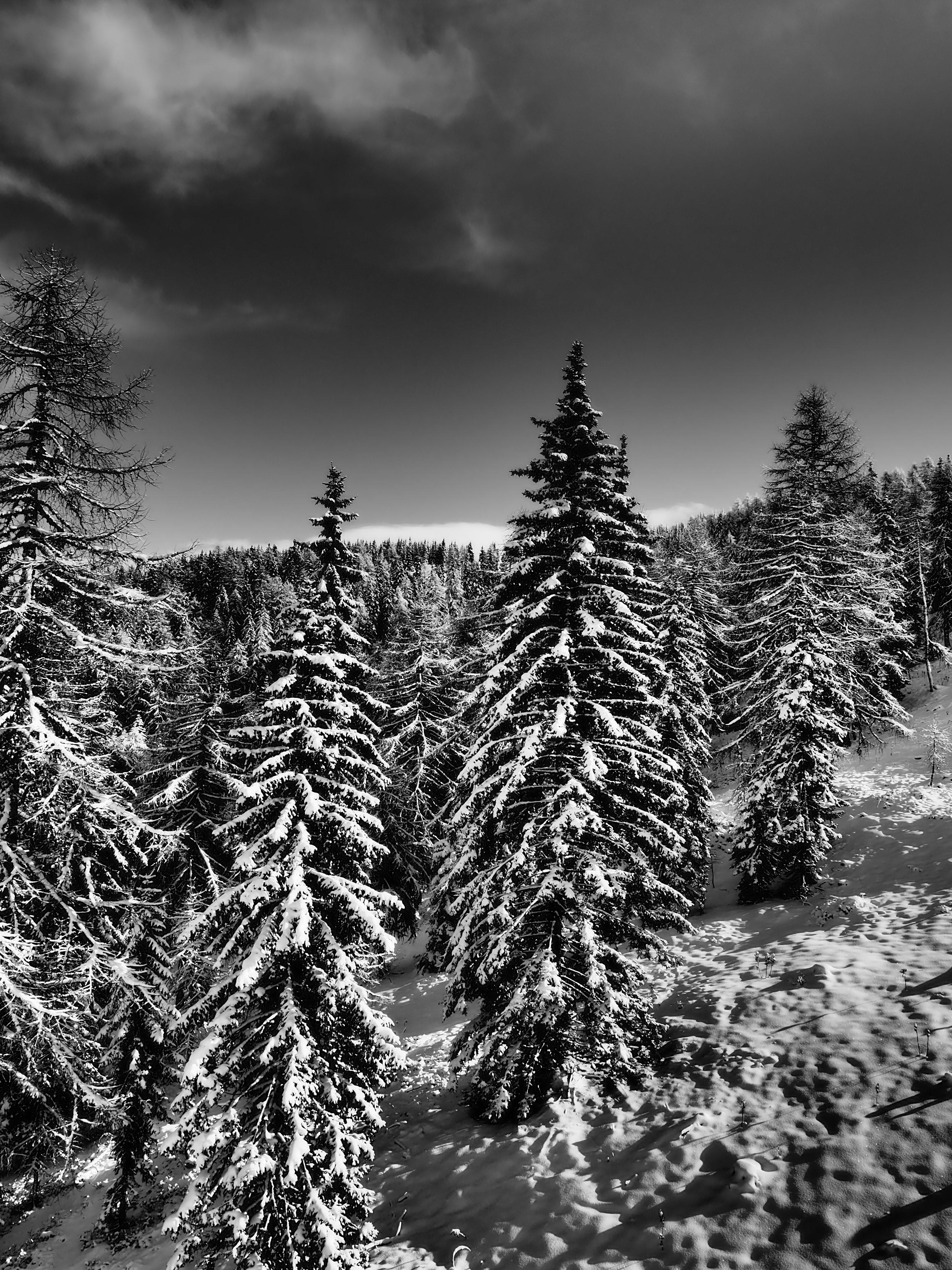миномета глубокой черно белые фотографии зимы артиста