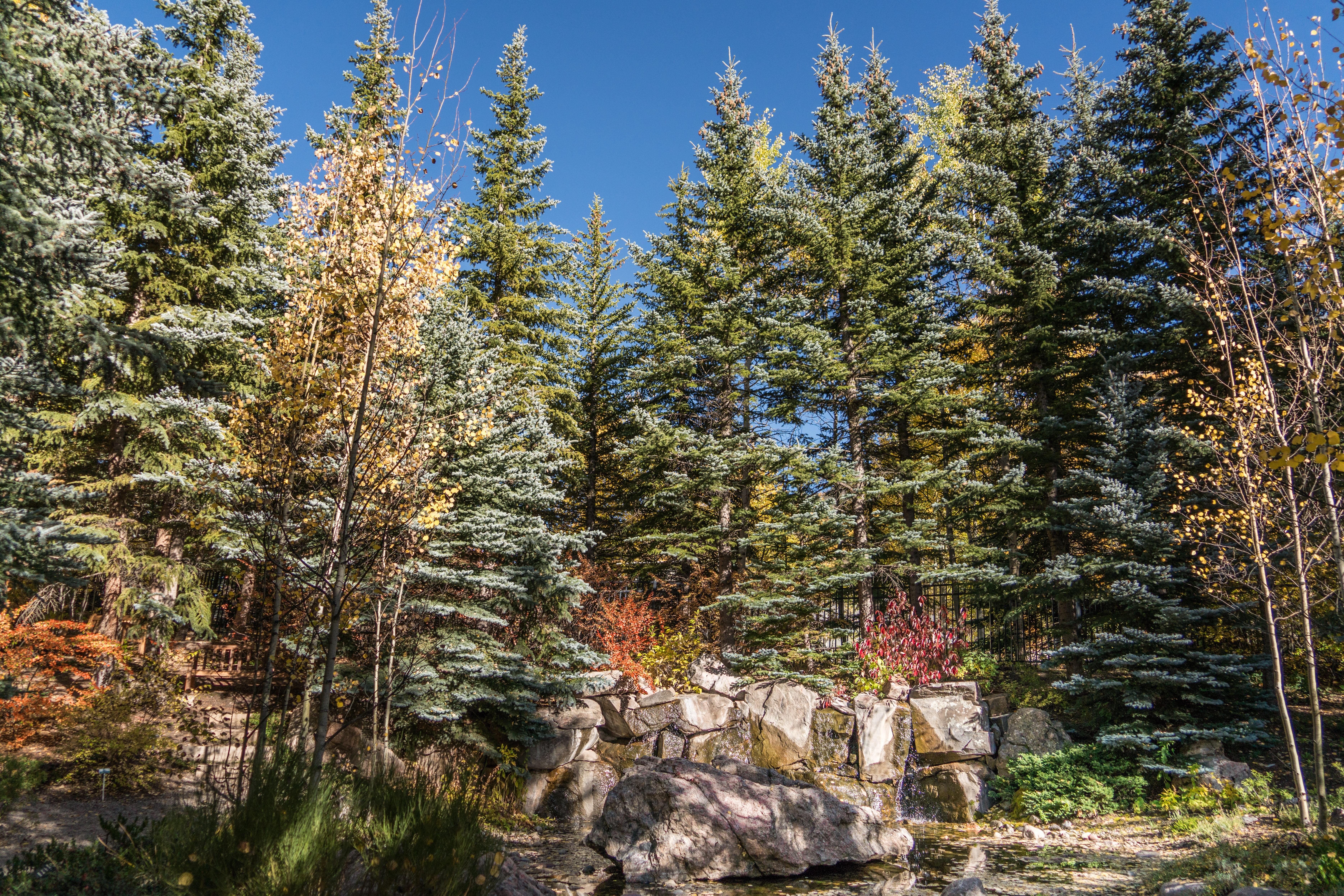 kostenlose foto : landschaft, baum, natur, wald, draussen, wildnis