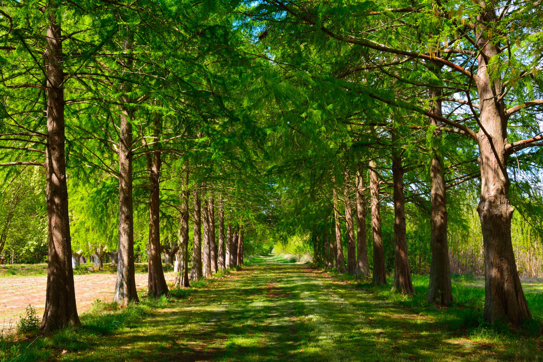 fotos gratis paisaje rbol naturaleza camino rama