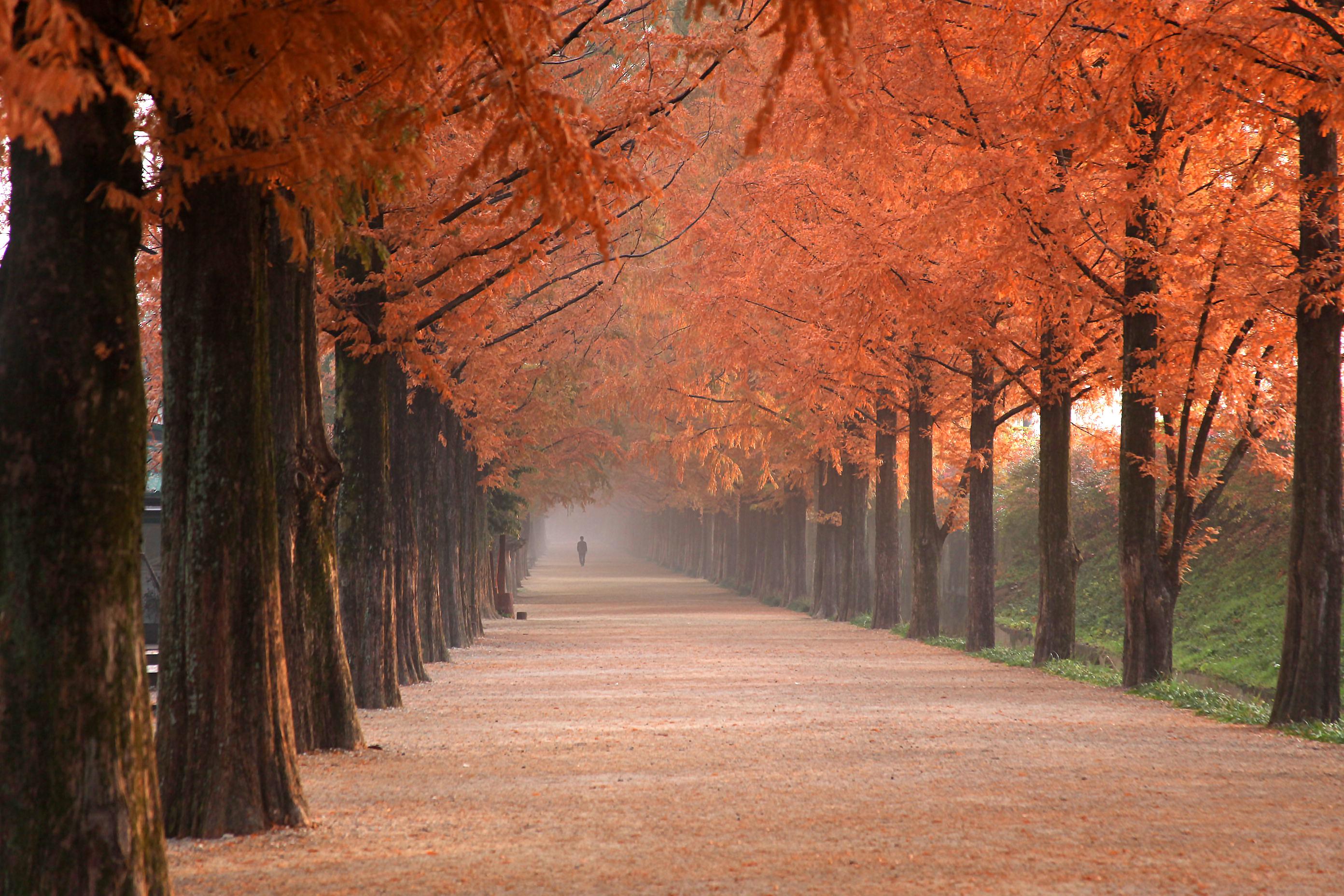 Images Gratuites Paysage Arbre La Nature Foret Chemin Branche