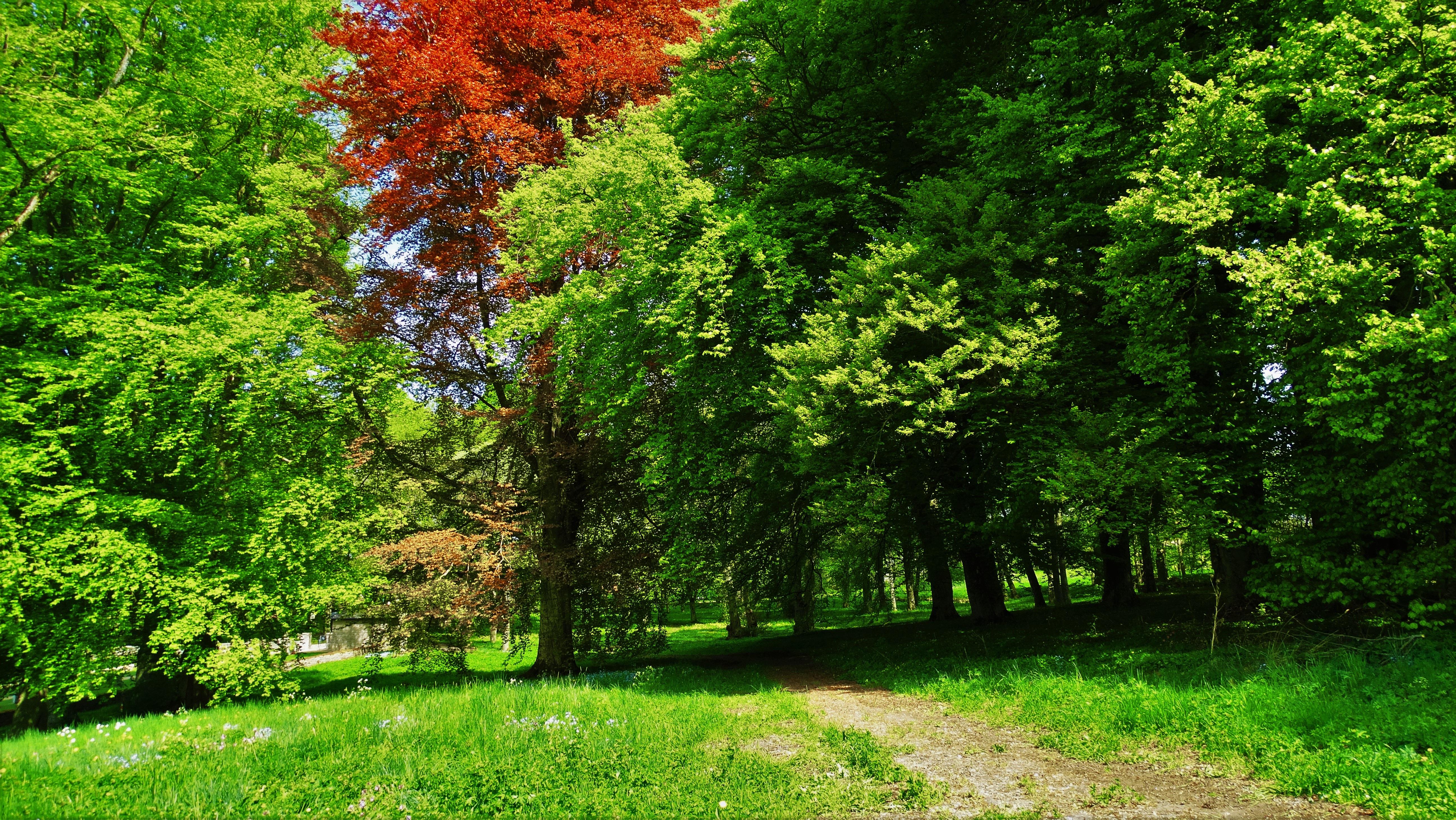 Fotos gratis paisaje rbol naturaleza bosque camino c sped planta prado luz de sol - Arboles jardin ...