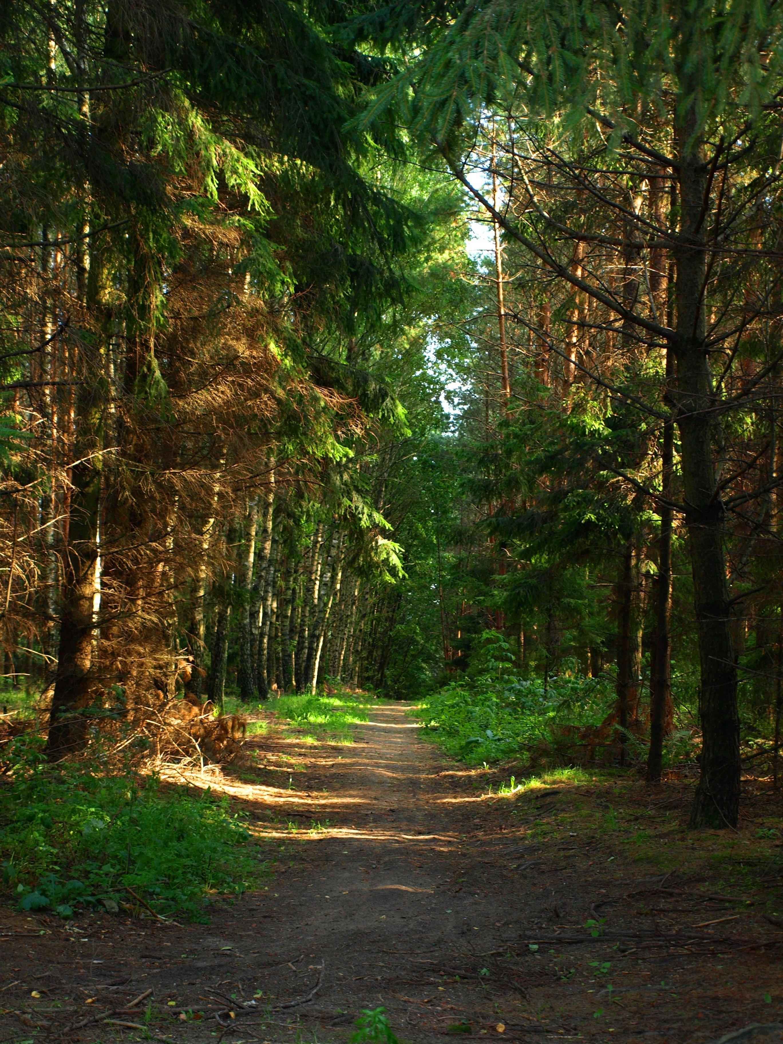 лучшие фотографии леса саженцы