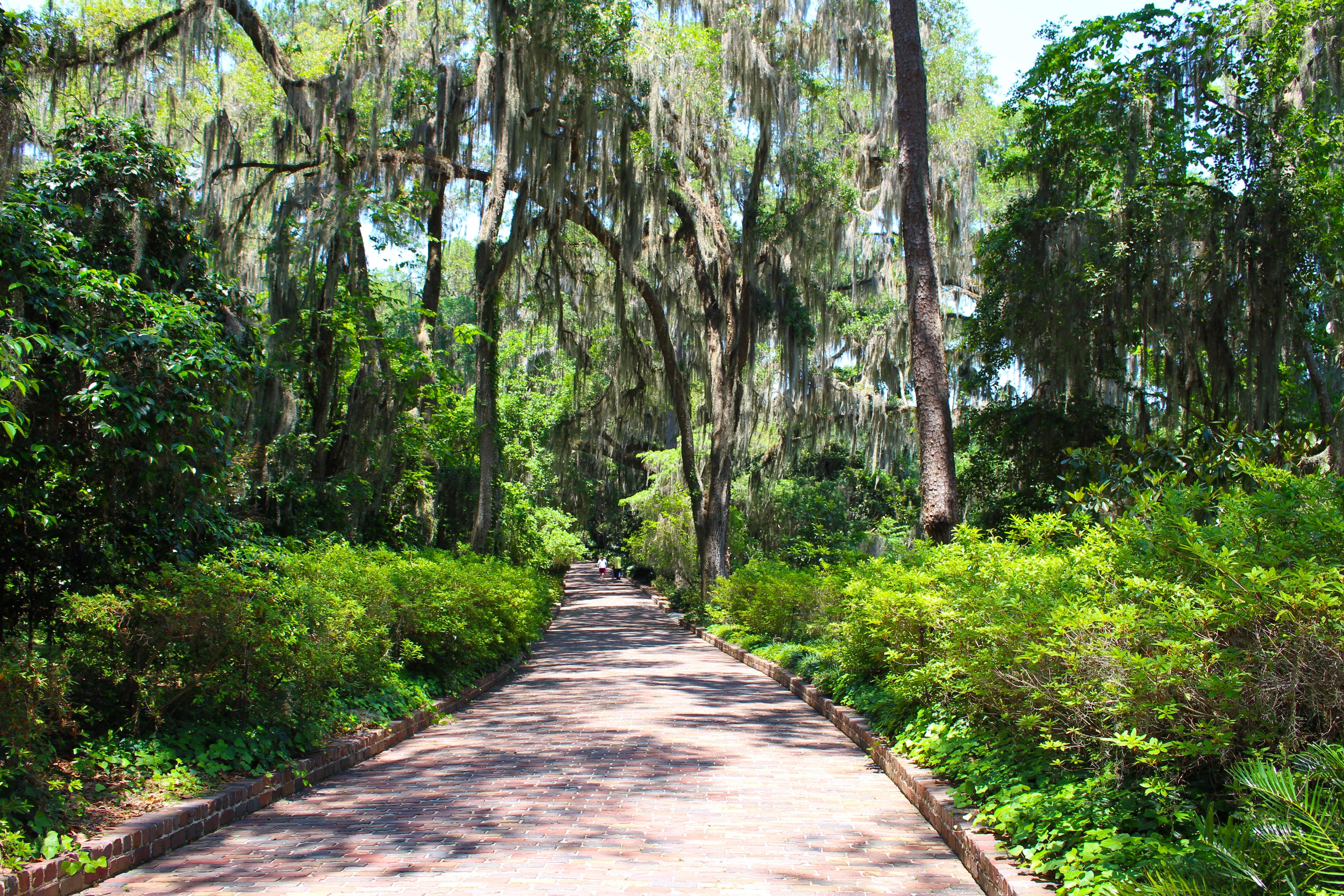 Fotos gratis paisaje rbol naturaleza camino al aire for Arboles jardineria
