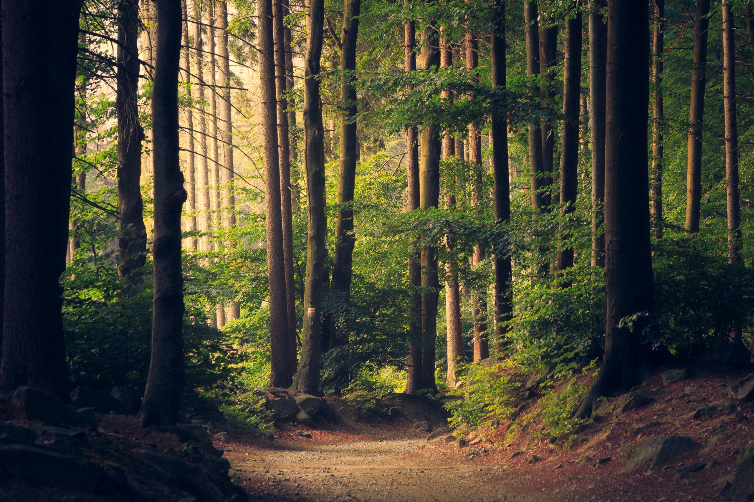 Гифка добрым, картинки леса с надписями