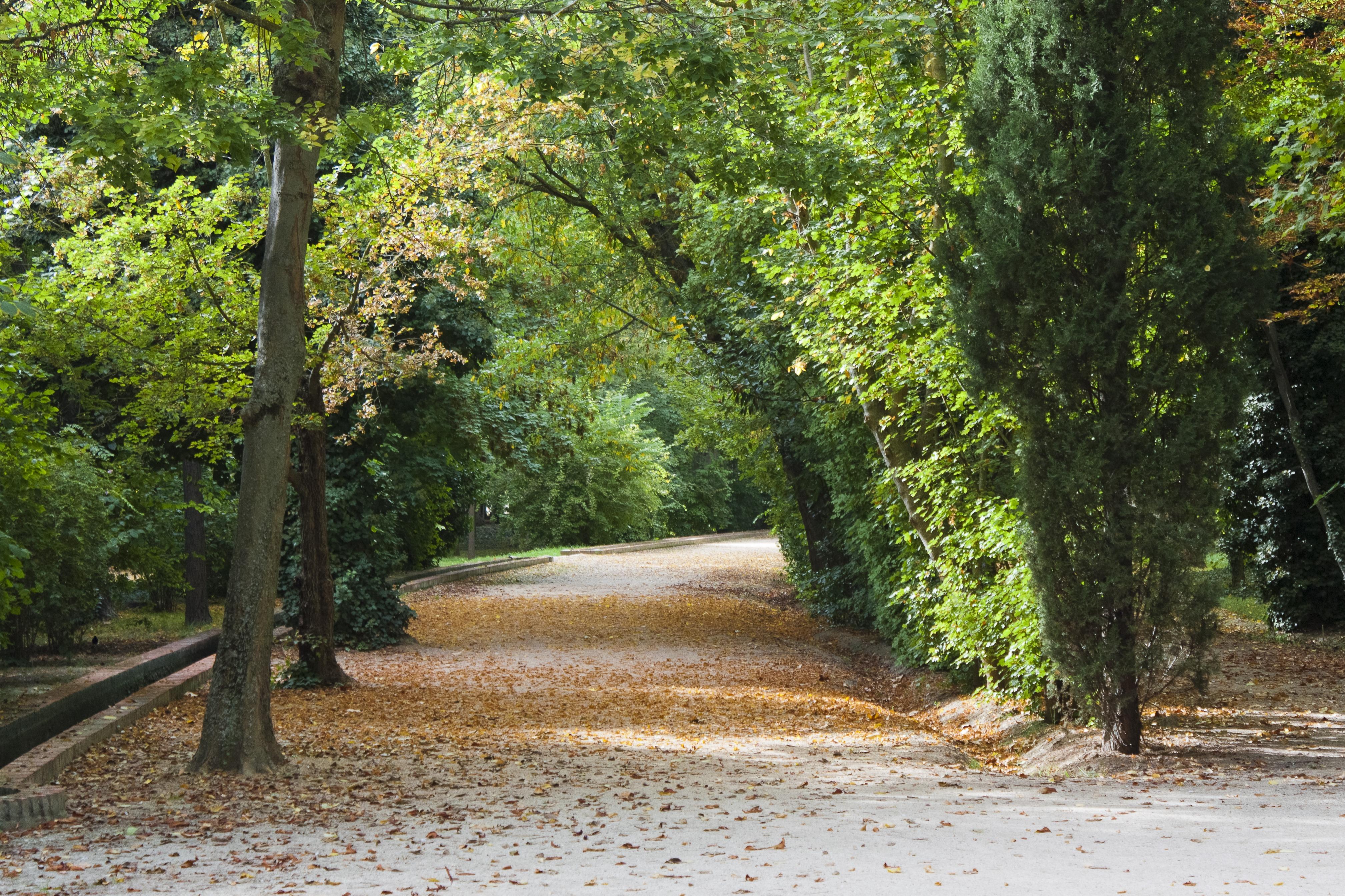 Fotos gratis paisaje rbol naturaleza bosque camino for Carson bosque y jardin
