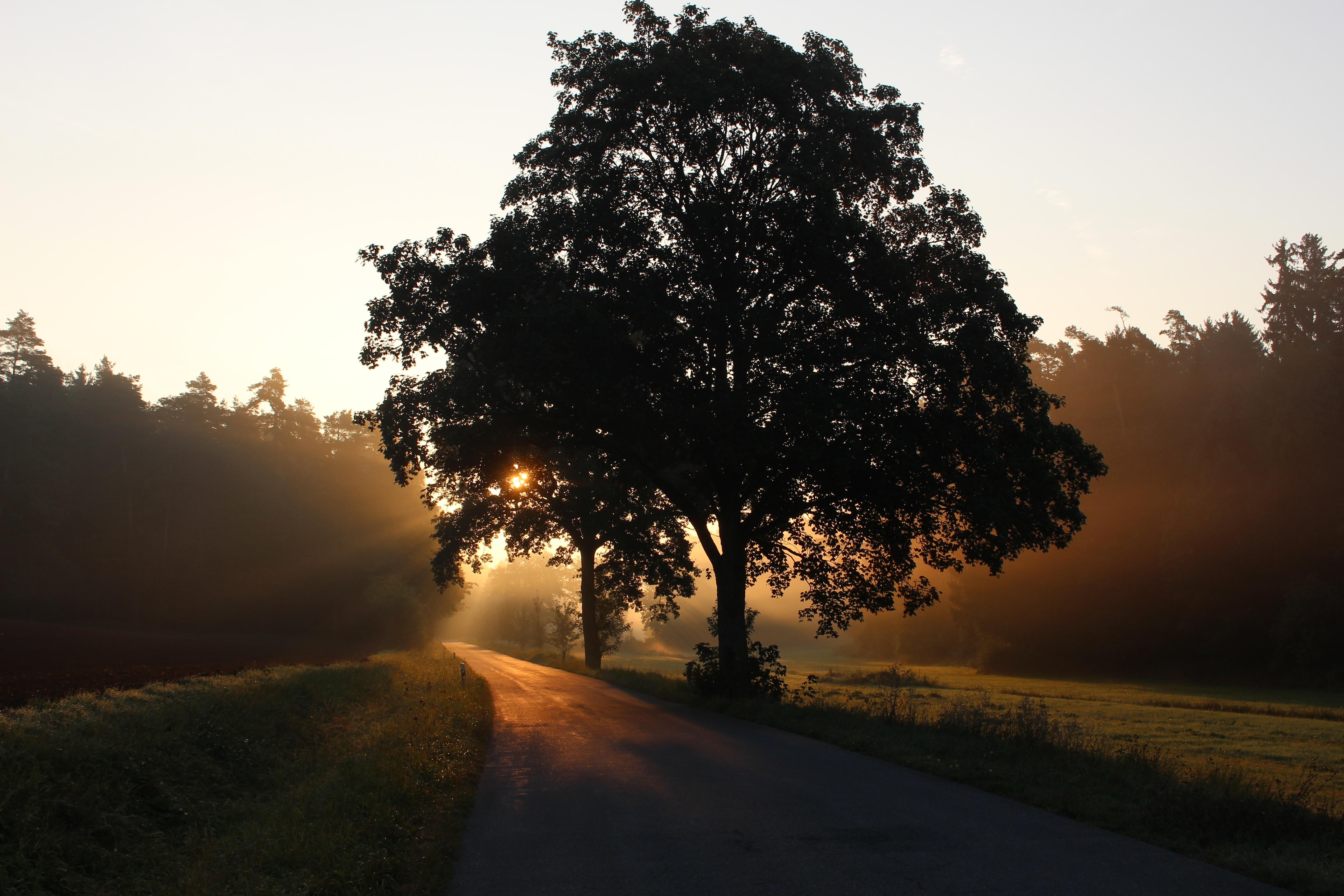 sun fog sunrise trees - photo #12