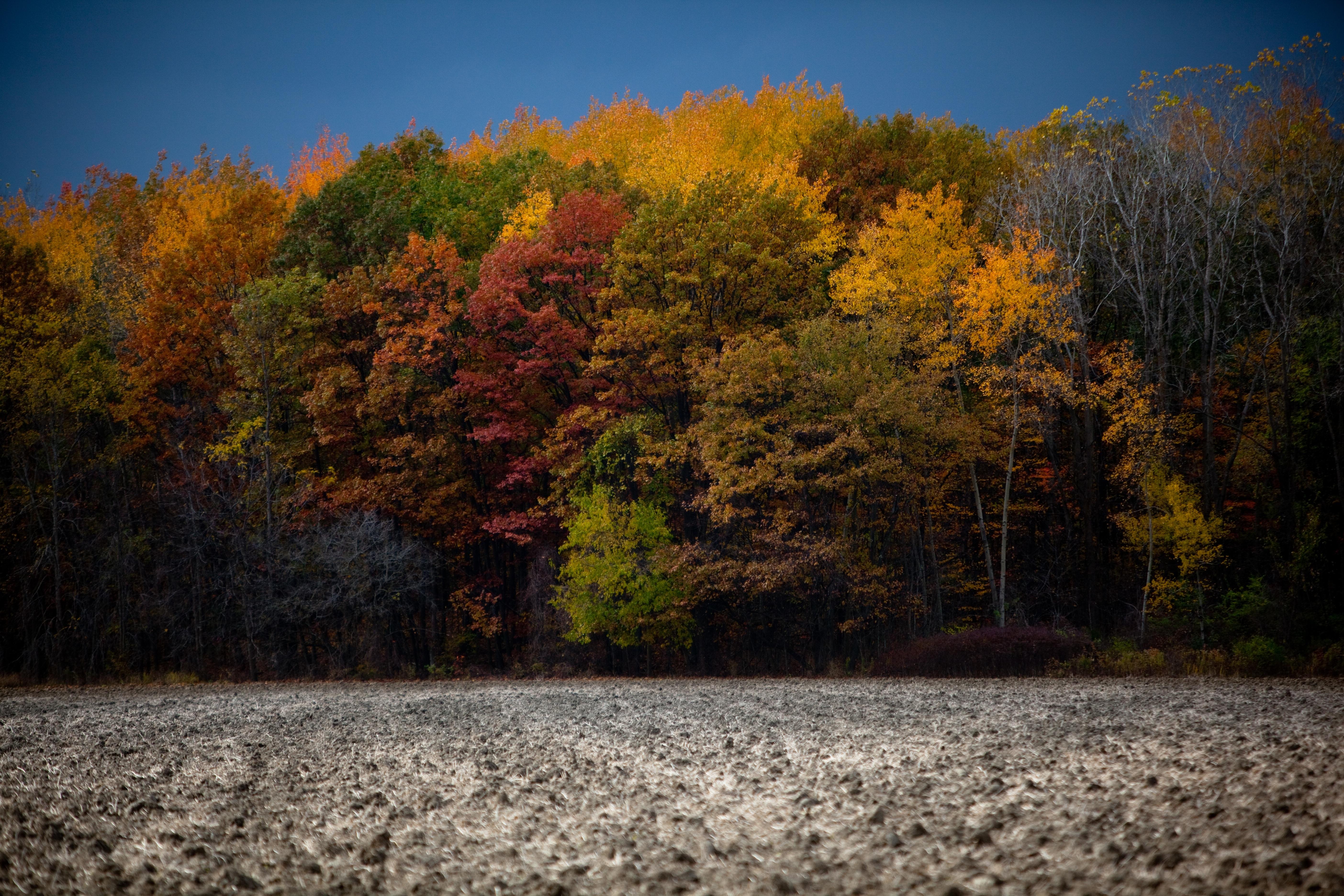Фото осенних листьев деревьев с названиями устаревших