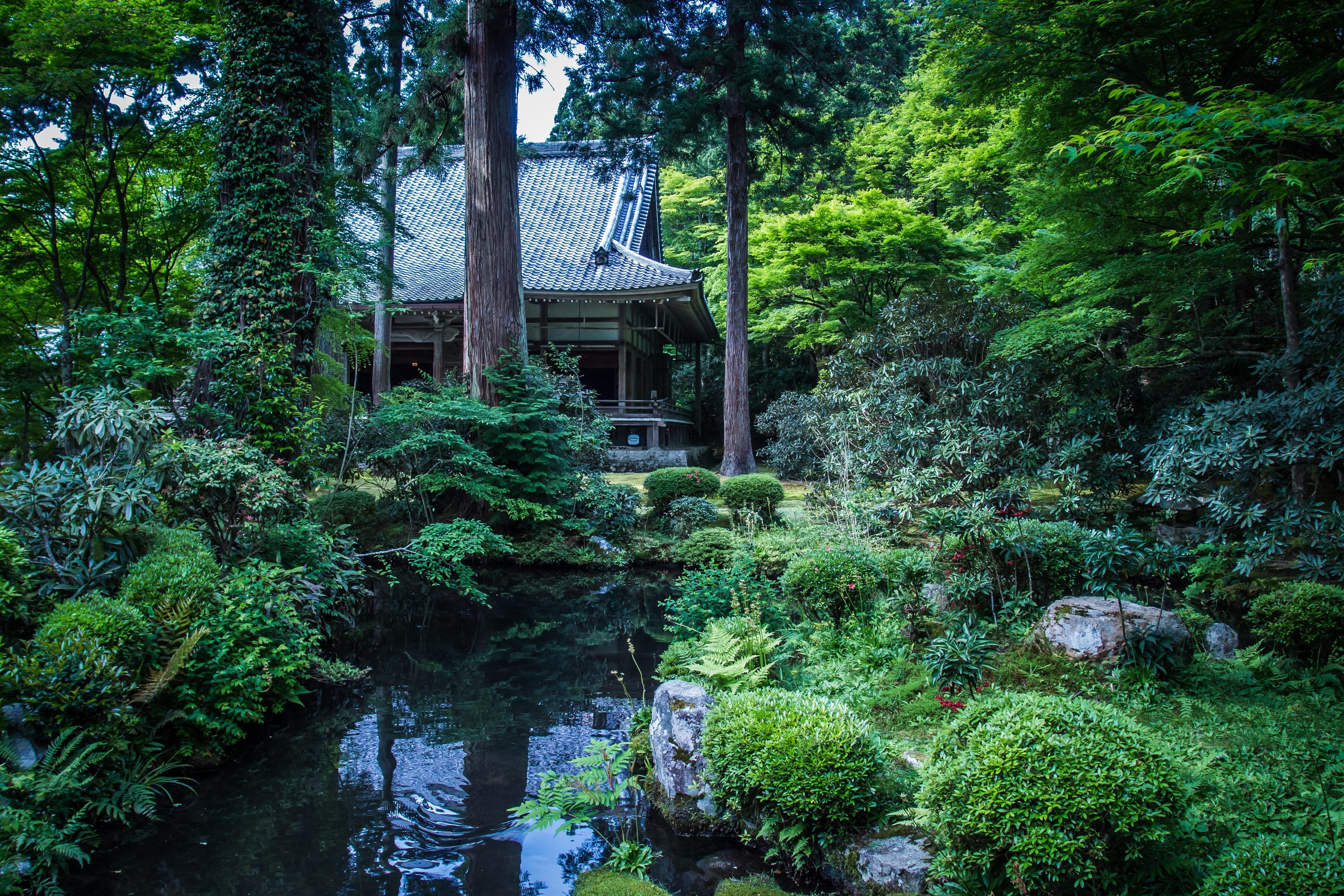 Images gratuites paysage arbre la nature plante for Hotel jardin de fleurs kyoto