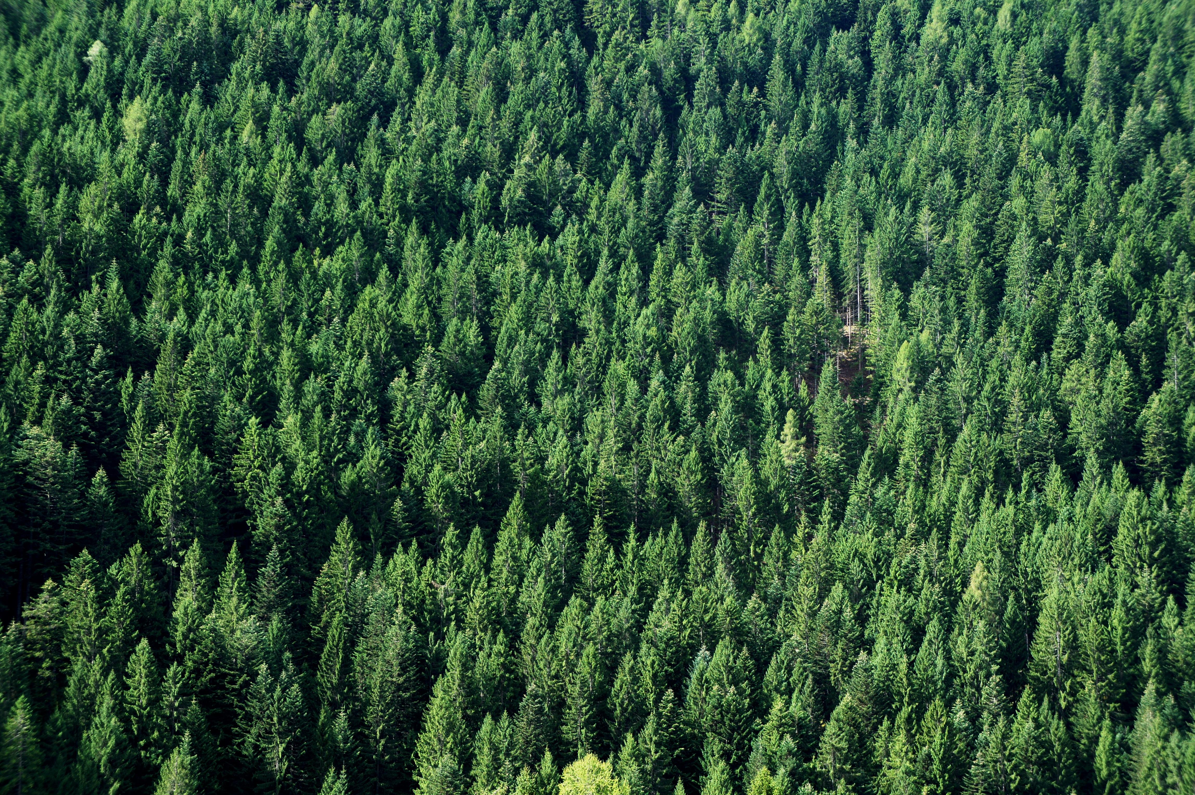 Gambar : pemandangan, alam, menanam, hijau sepanjang tahun ...