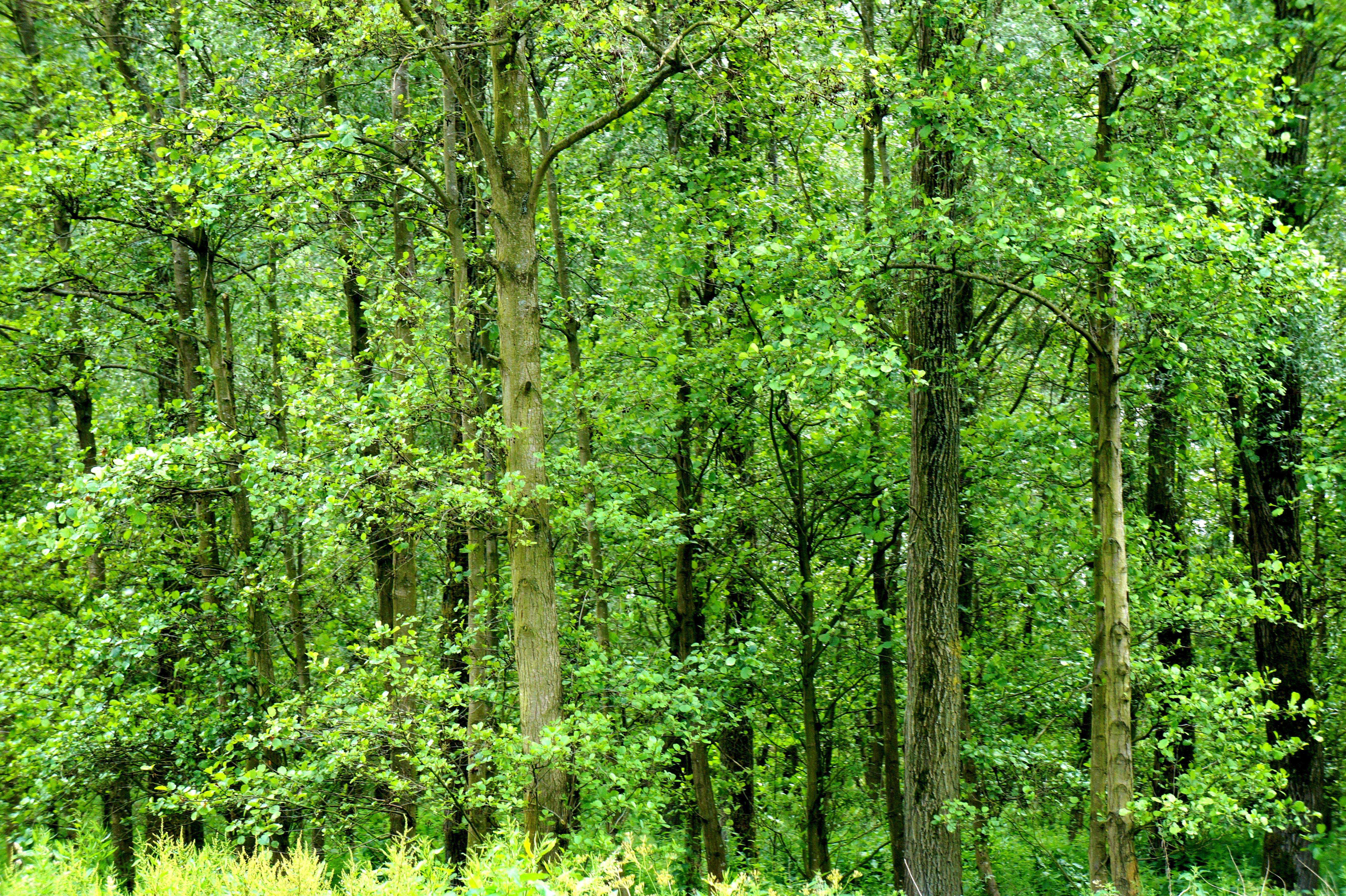 появилась лиственный лес картинки для презентации требовала заключение под