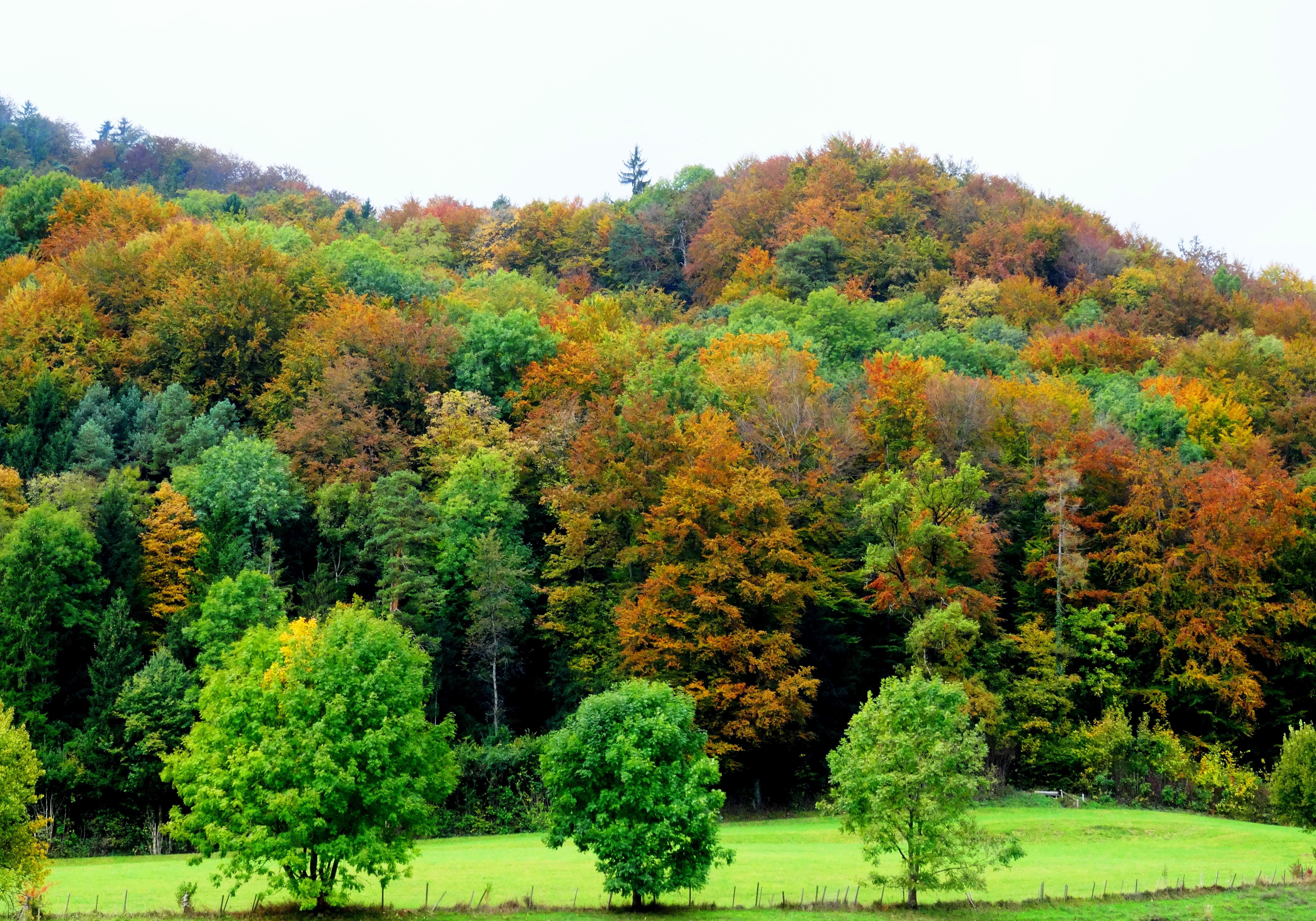 Природные зоны смешанные леса картинки