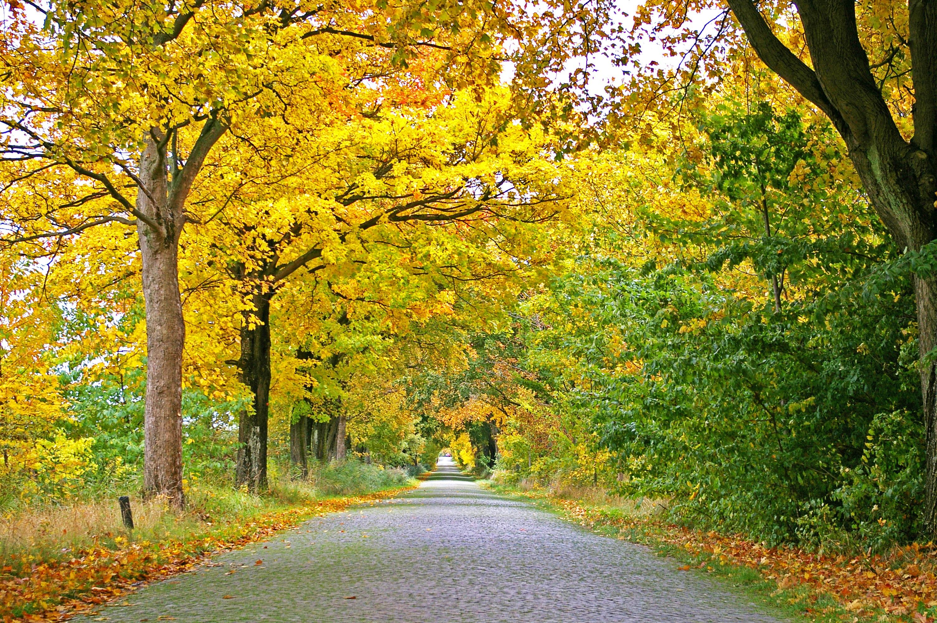Free Images : landscape, nature, road, sunlight, leaf, flower ...