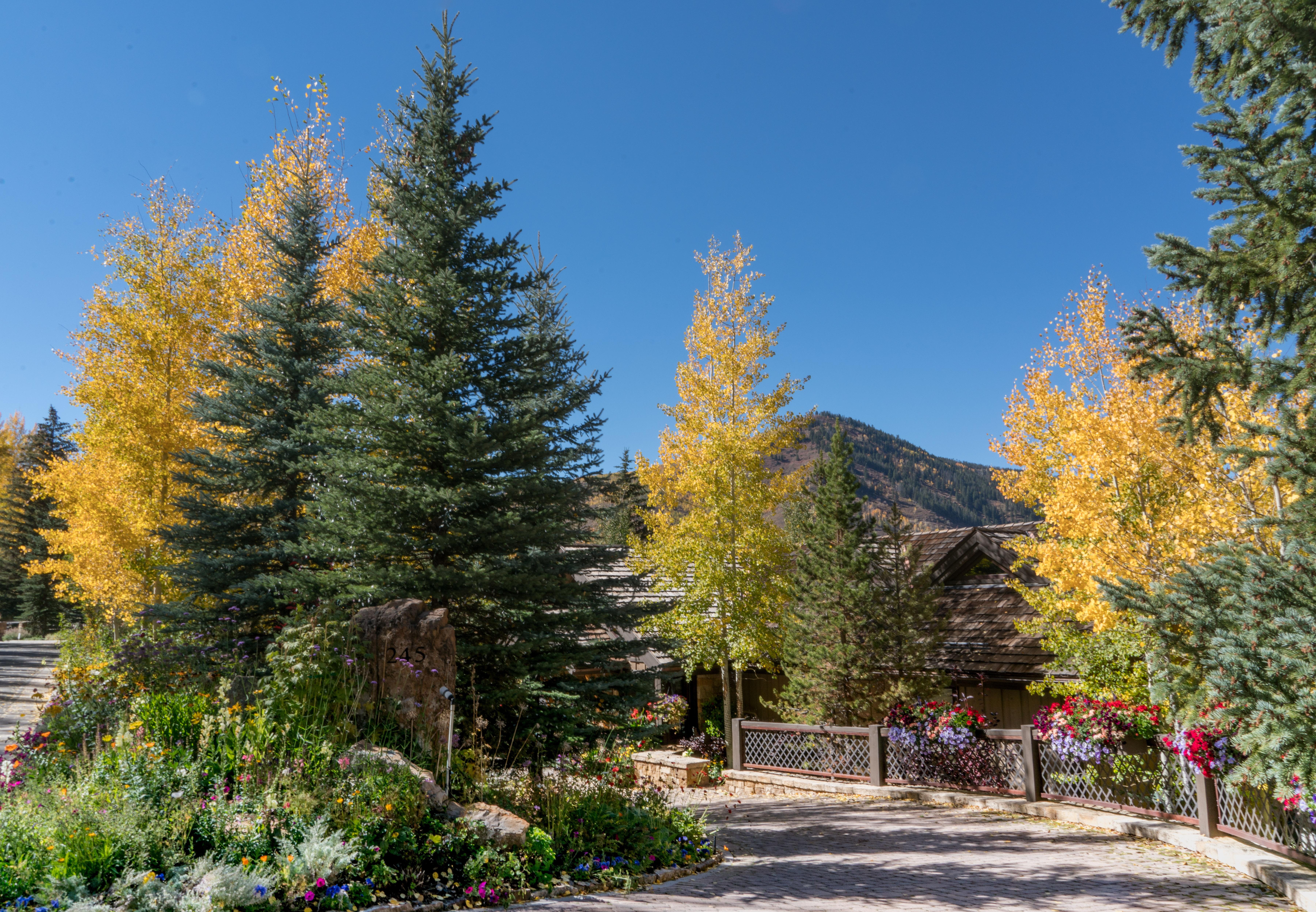 Images gratuites paysage arbre la nature for t for Sapin d ornement jardin